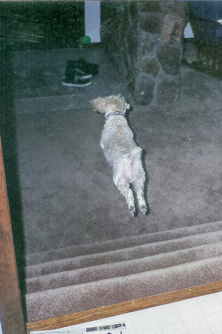 Dog Blog (5 of 14).jpg