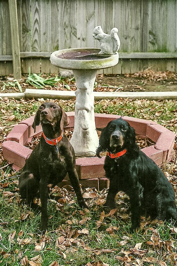 Dog Blog (10 of 14).jpg
