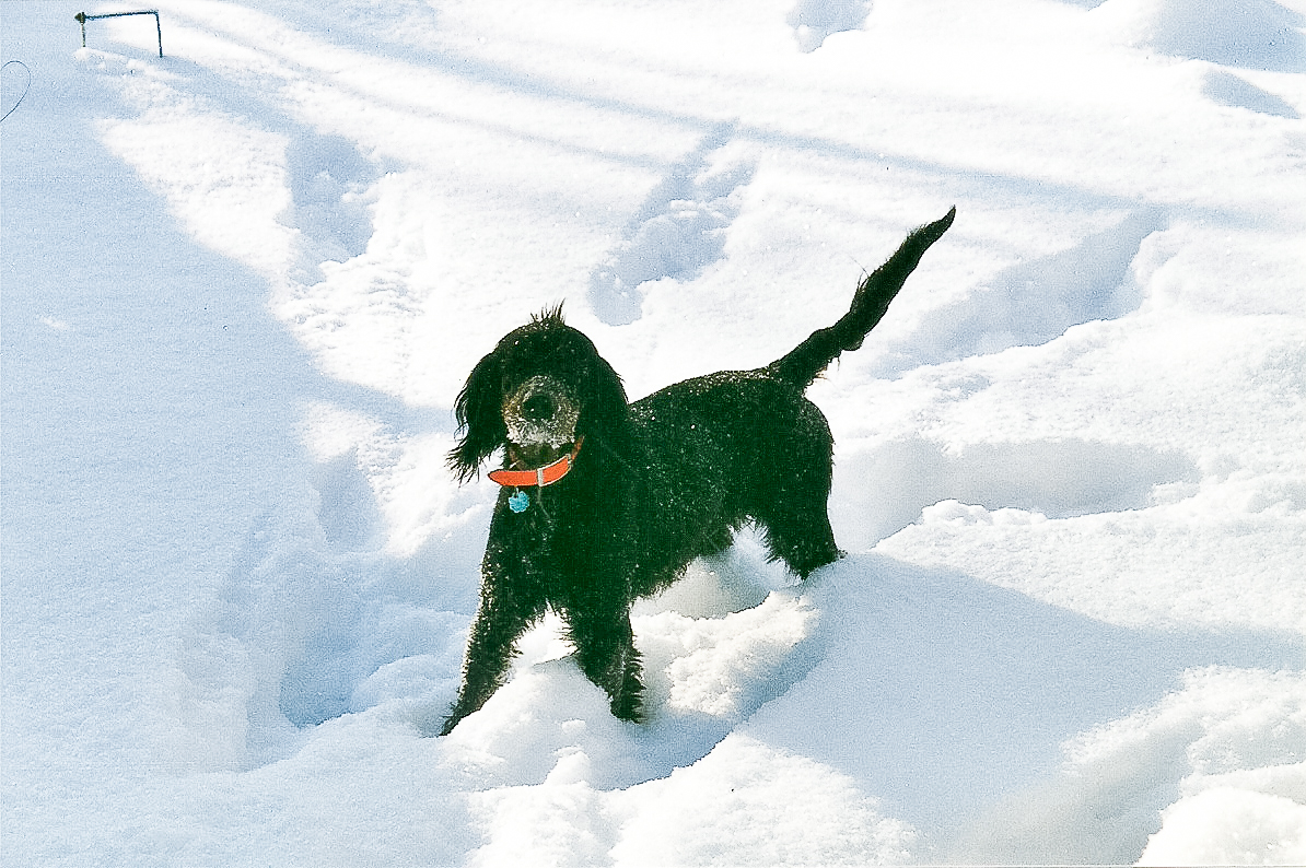 Dog Blog (13 of 14).jpg