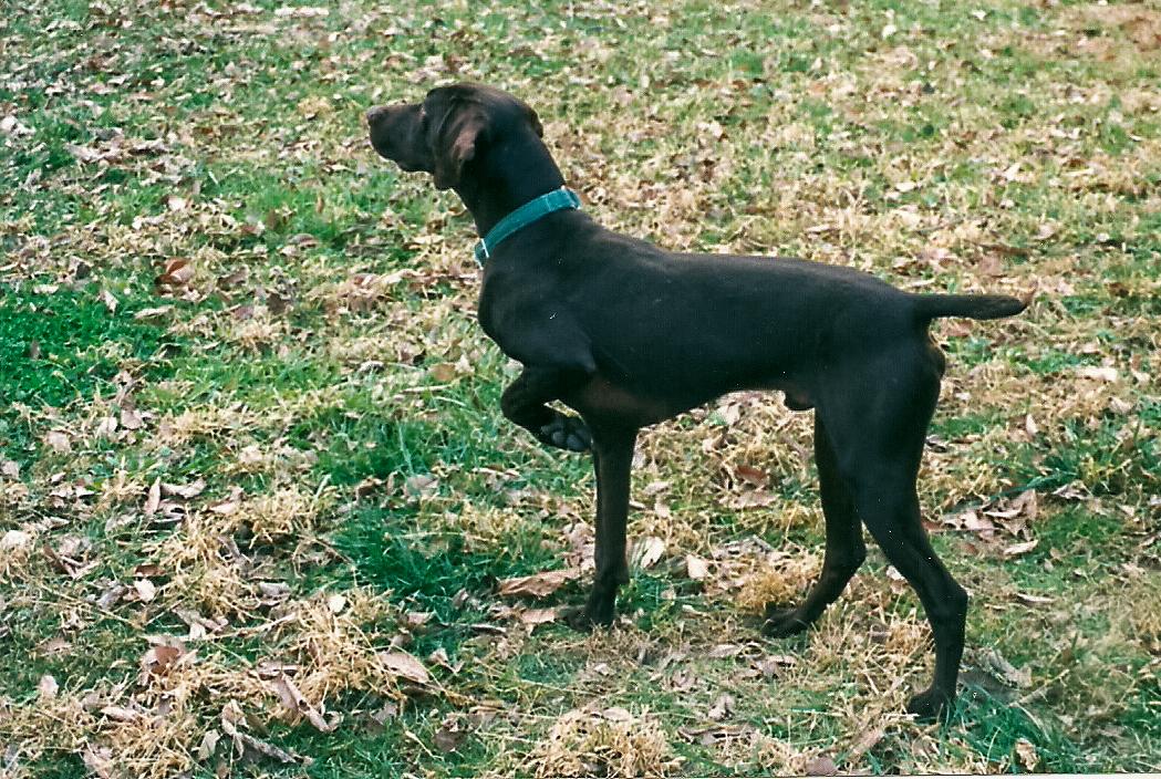 Dog Blog (12 of 14).jpg