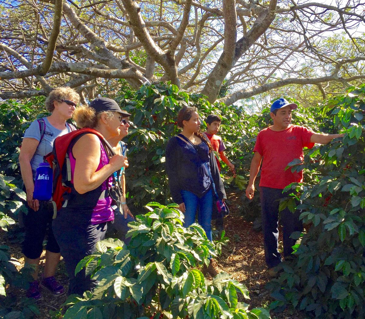 Mayan Community Glamping Trek - Coffee Experience.jpg