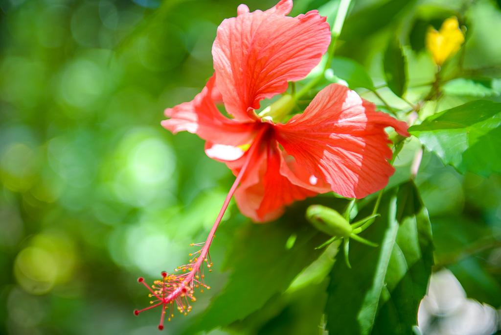 Soak up the abundant flora.   Meals: B   L   D