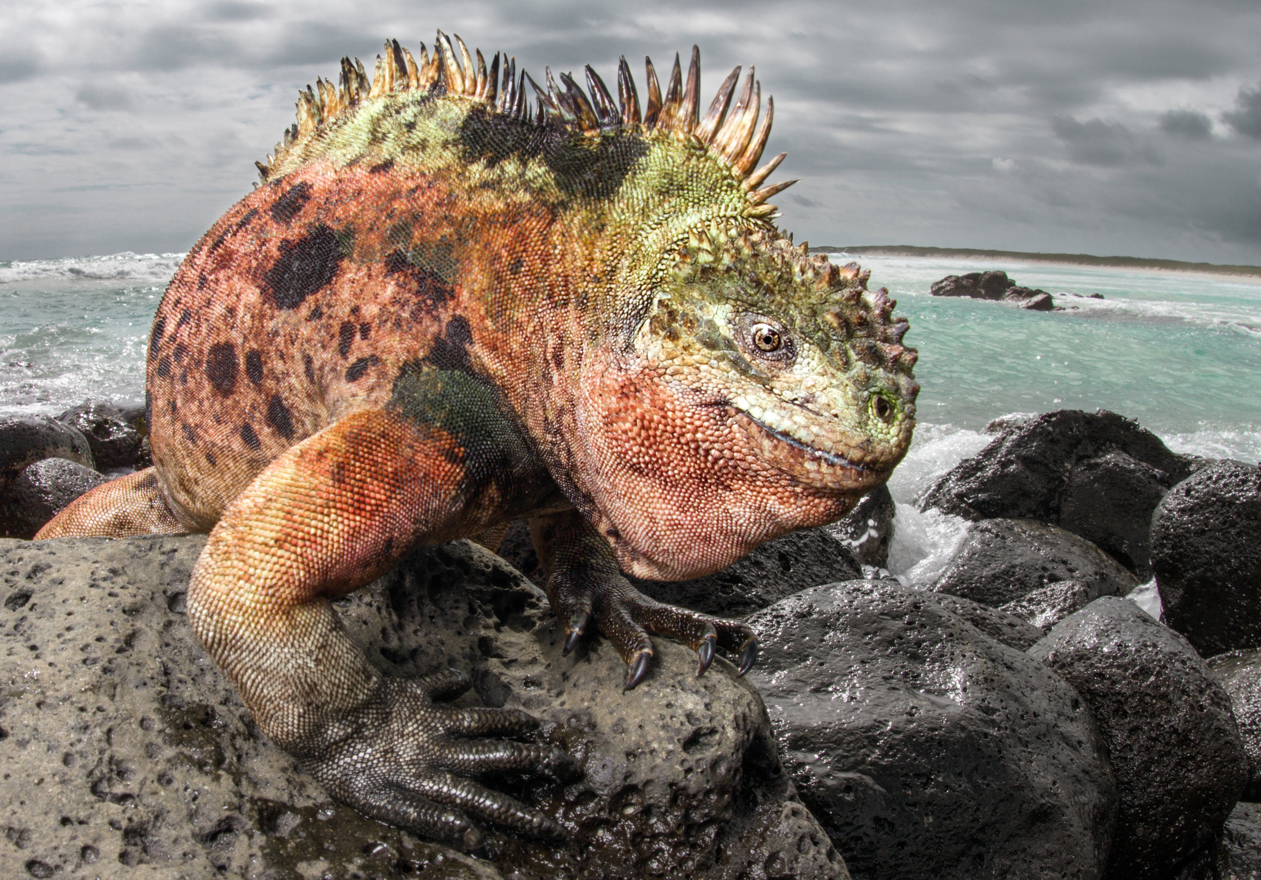 The land iguanas love to sun themselves and pose for the camera.    Meals: B | L