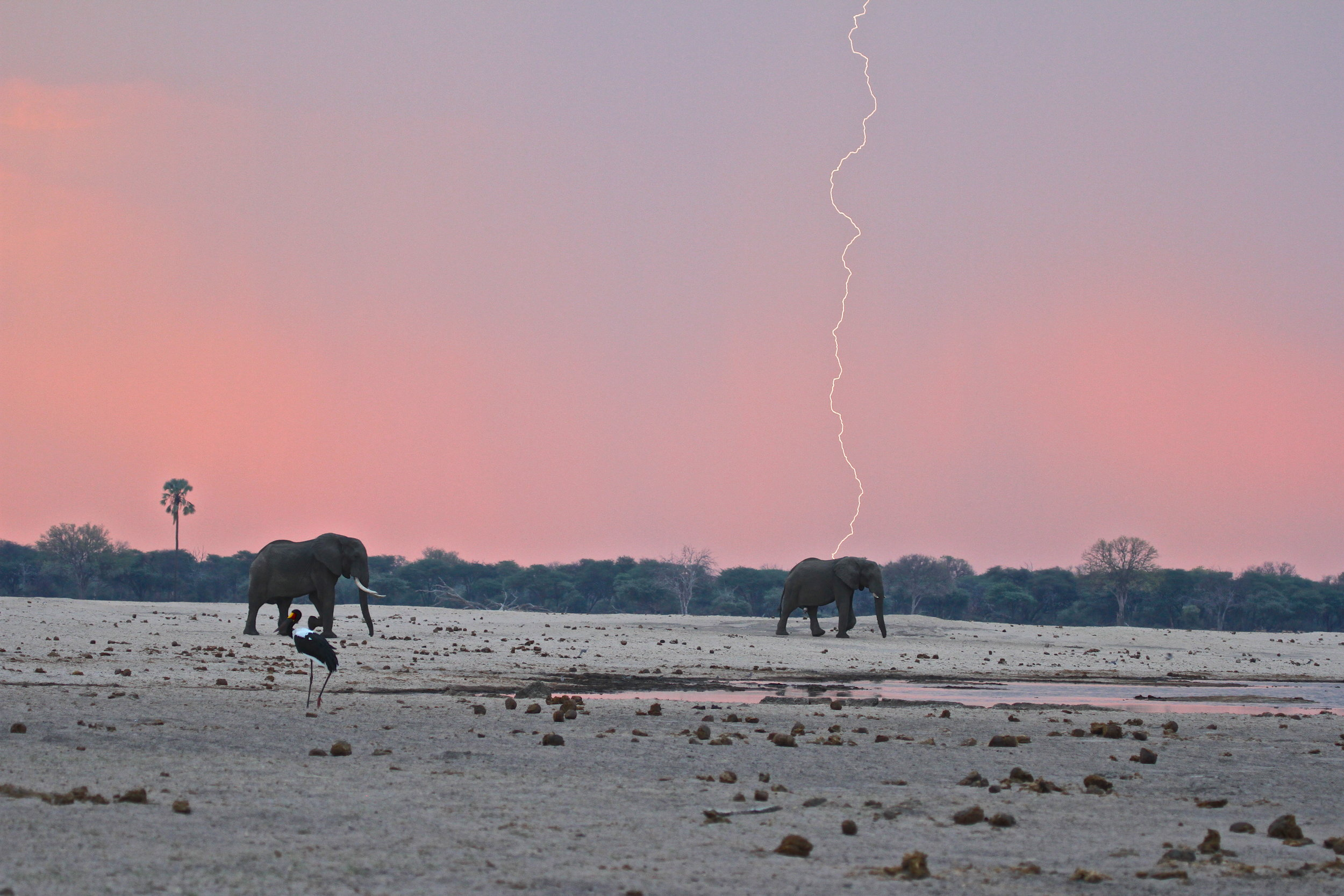 31. Imvelo Safari Lodges - Bomani Tented Lodge - First rains have arrived in a very parched Hwange.jpg