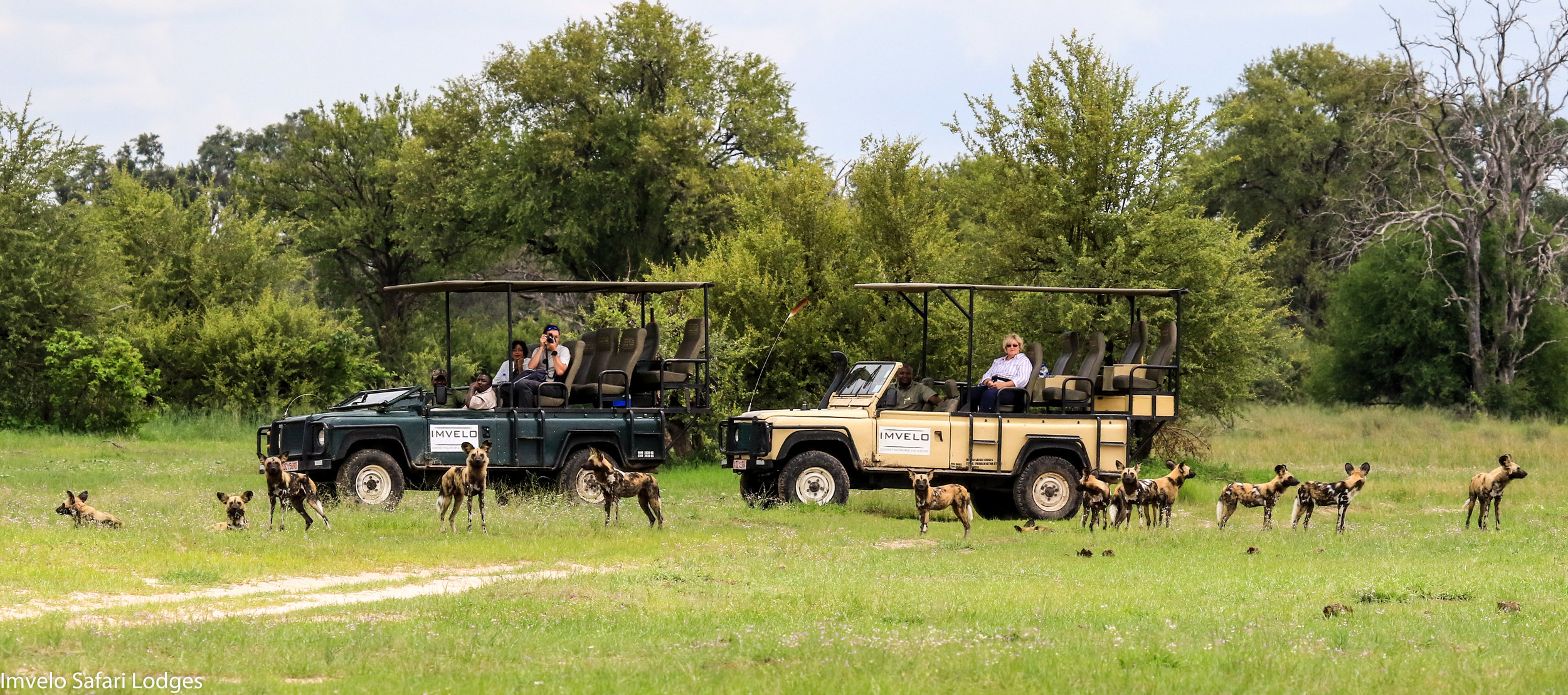 52i - Imvelo Safari Lodges - Bomani - New Years day for Cusp and her pack.jpg