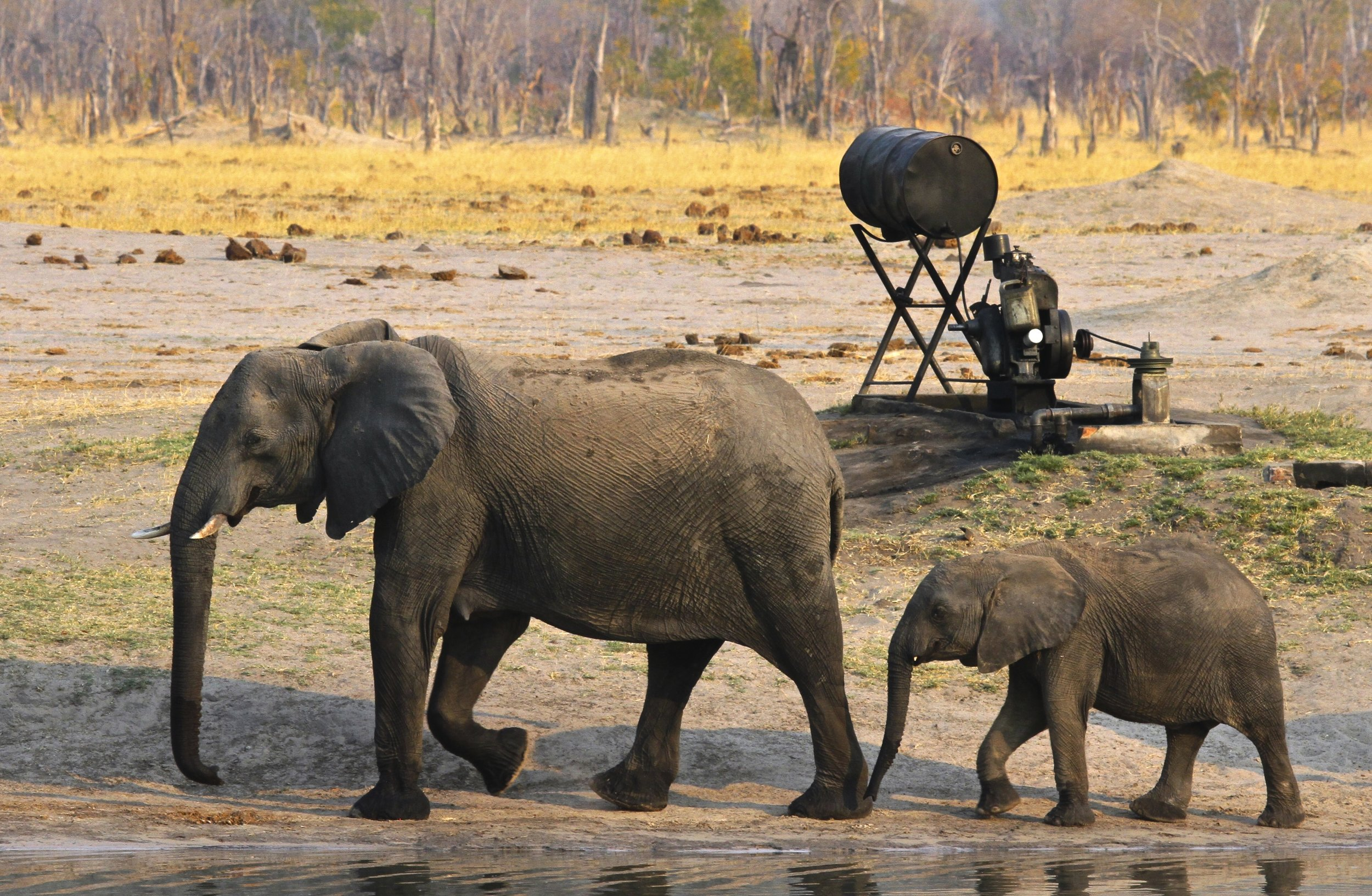 58. Imvelo Safari Lodges - Bomani Tented Lodge - Hwange has no rivers it only has pumps.jpg