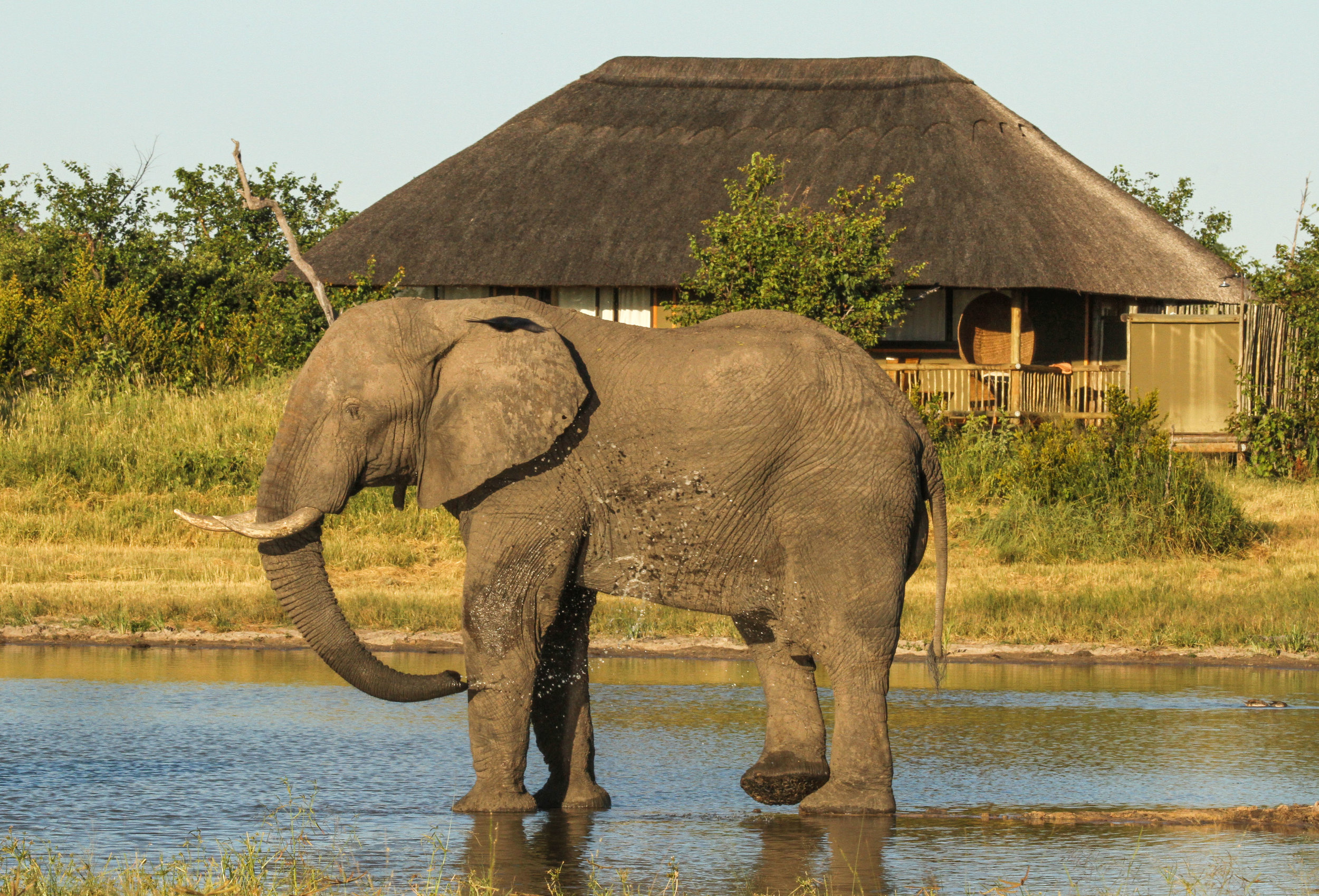 17. Imvelo Safari Lodges - Nehimba - camp waterhole is a favorite with the elephant.jpg