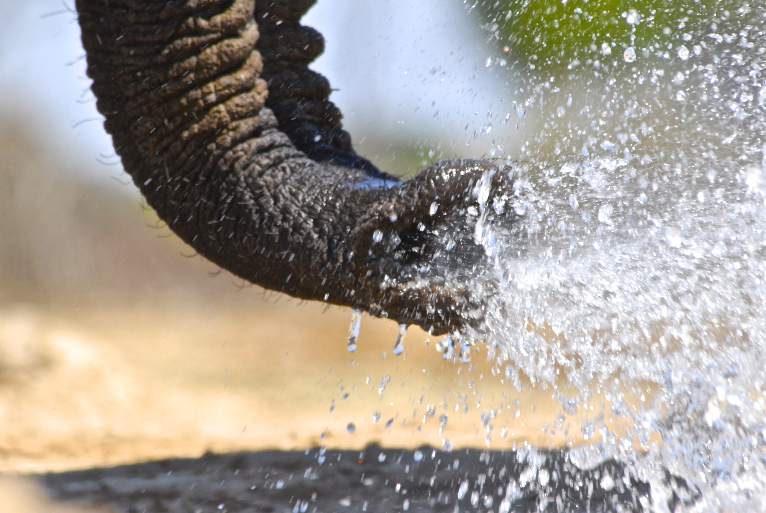 56. Imvelo Safari Lodges - Bomani Tented Lodge - Mind the splash at the Look Up photography blind.jpg