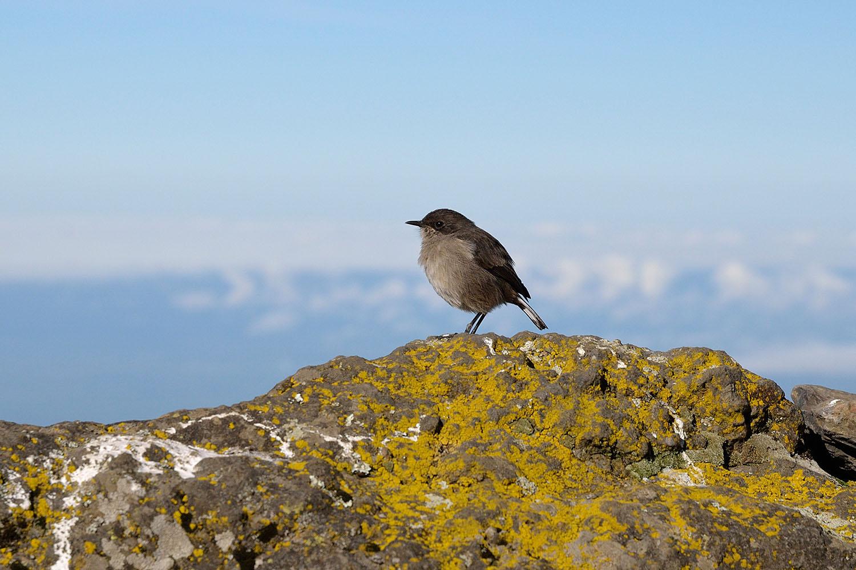 kilimanjaro-national-park-destinations-tanzania-maasai-wanderings-africa-bird.jpg