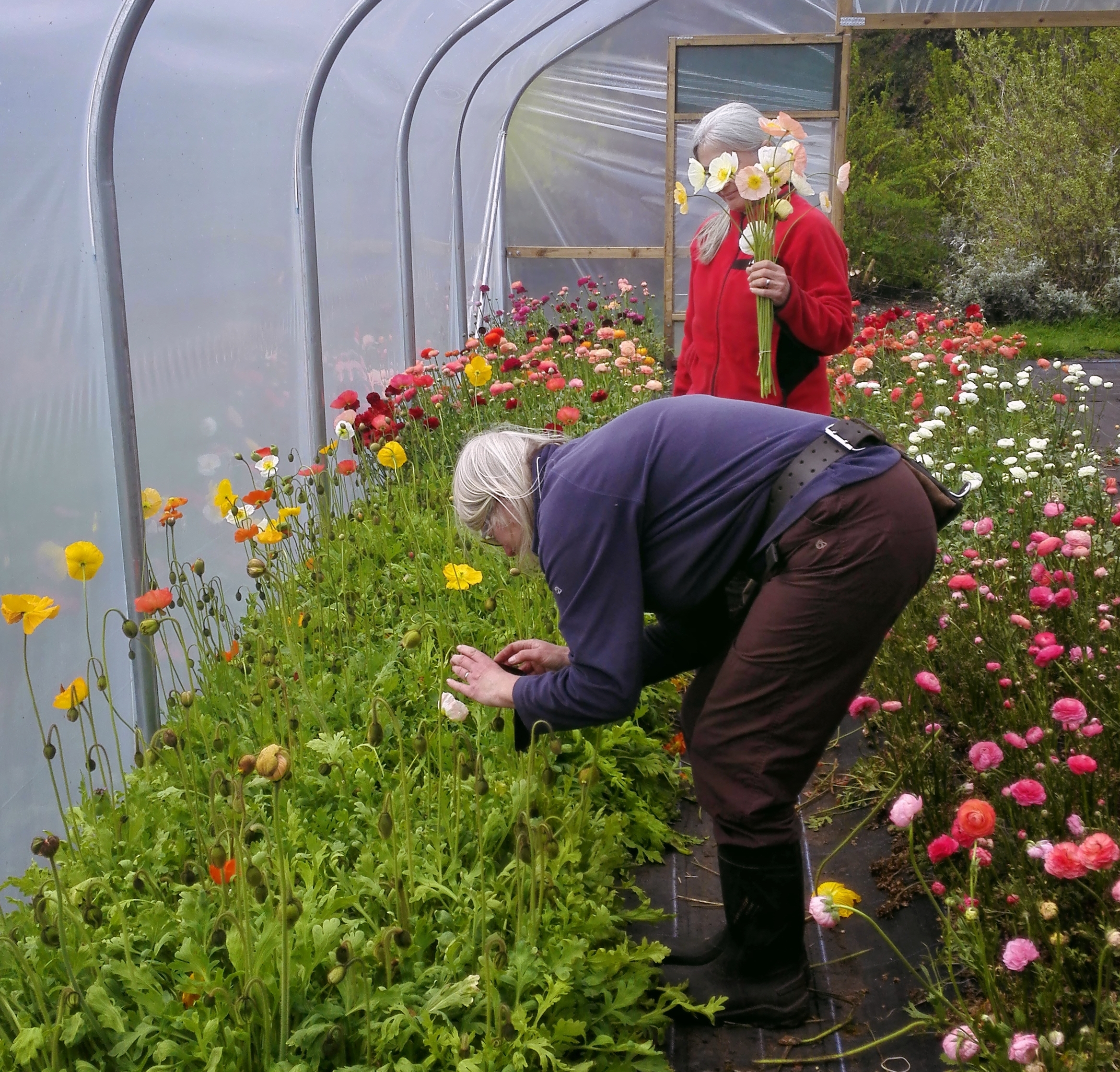 - A great flower farm in the North West is Carols Garden run by Carol Siddorn who produces the most beautiful and unusual flowers grown in as sustainable way as possible. She grows over 500 varieties of flowers and plants!