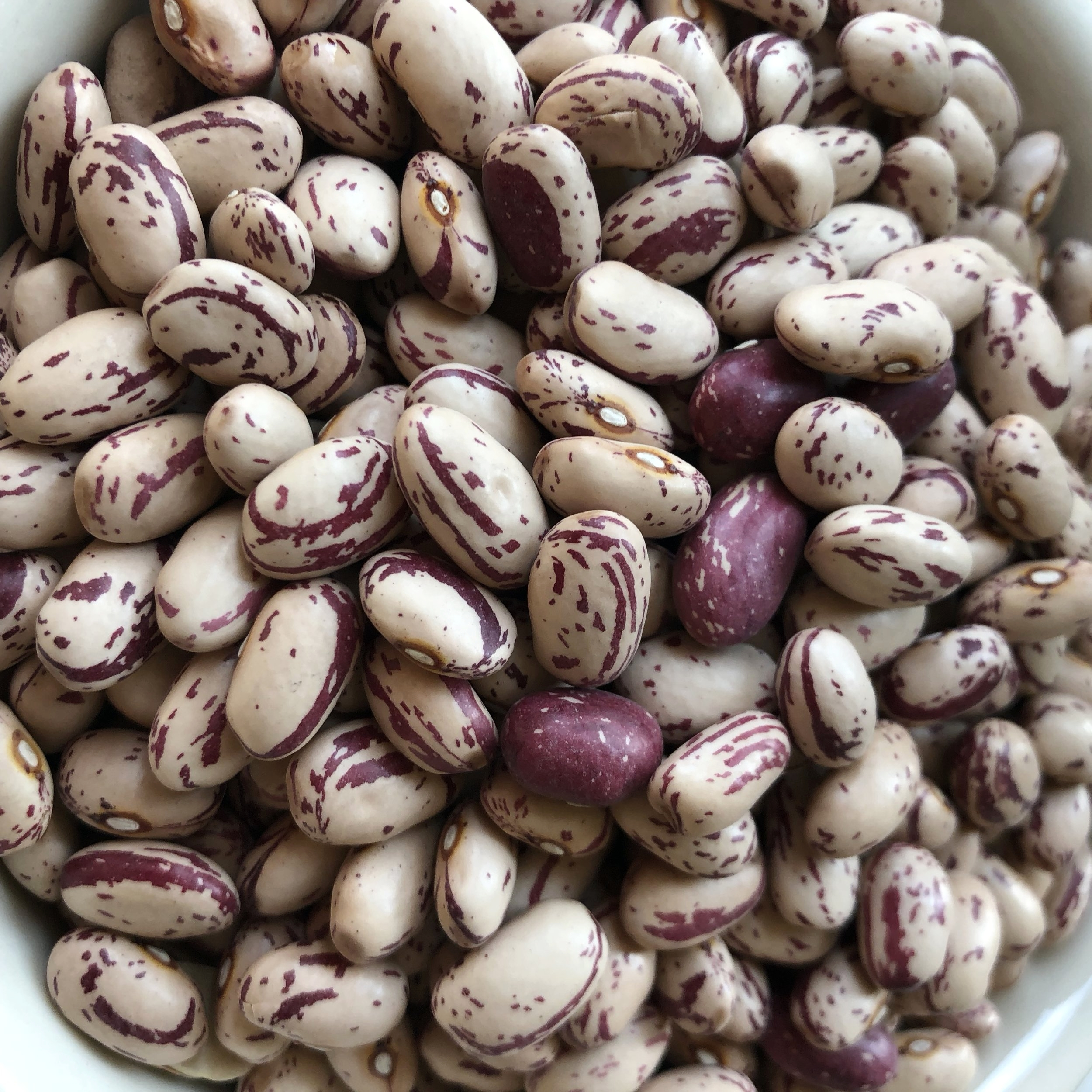 "Note on beans: Traditional New England succotash uses cranberry or ""cattle beans"" like the ones pictured here. See that beautiful cranberry color marbled throughout? If you can get fresh cranberry beans straight from the shell for your summer succotash, that is ideal. Or substitute fresh shelling peas, snap peas, green beans, or lima beans. You can also cook up the dried ones, like you make any dried bean and add to the succotash at the very end."