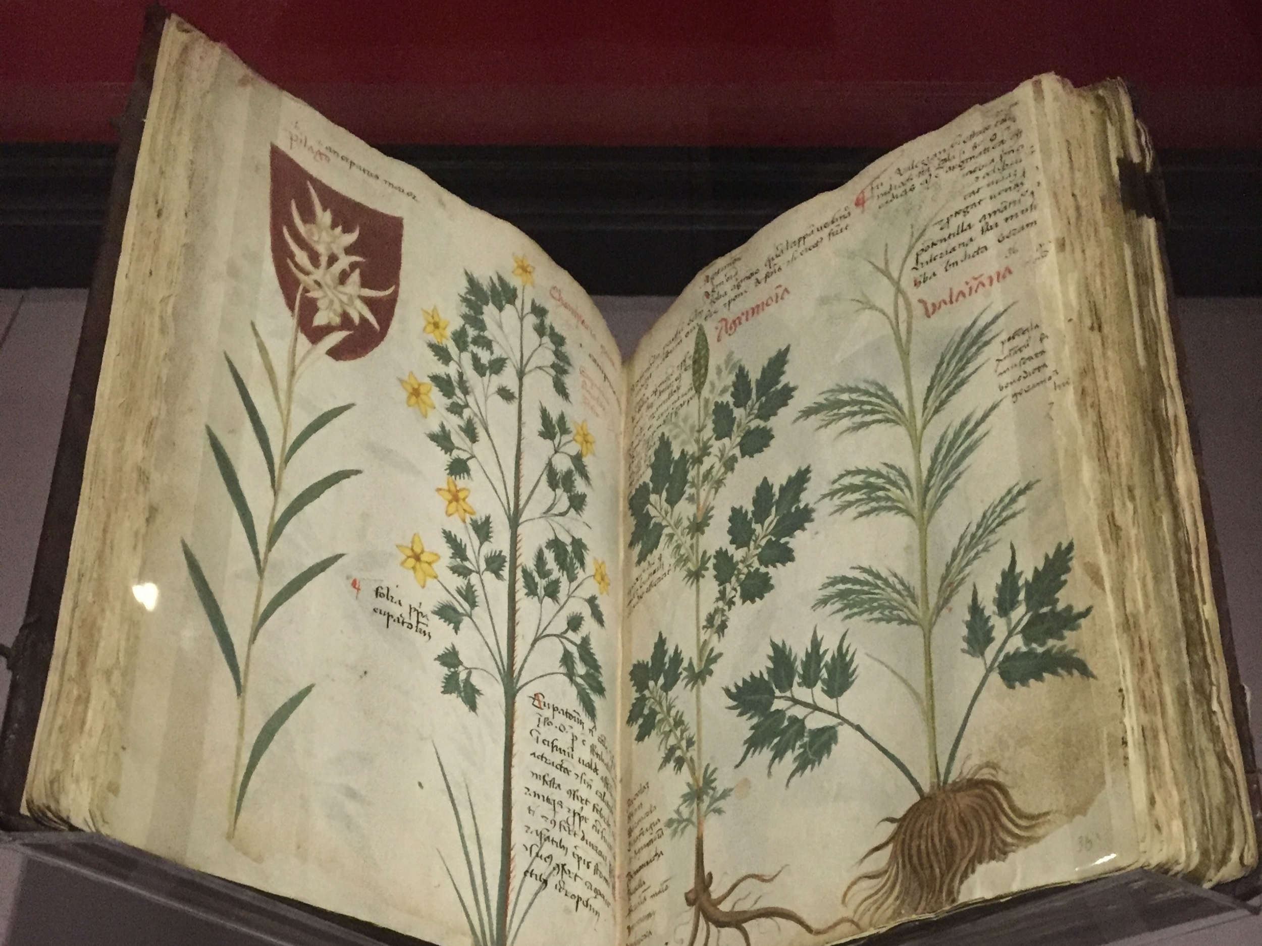 Copy of Medicinal Plant Book - London, England
