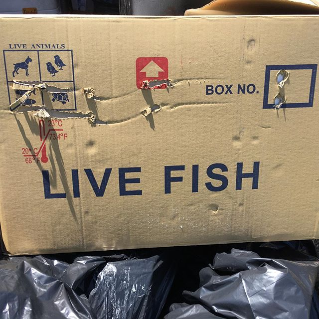 Its alive, but fresh?  #market #fresh #fish #consumption #packaging #urban #nyc #livefish