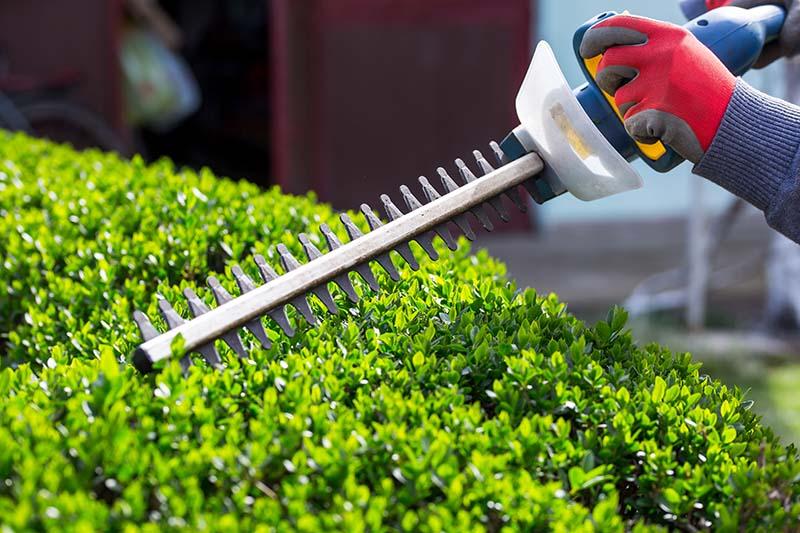 shrub-trimming.jpg