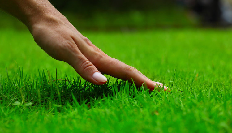 lawn-fertilizing-hand.jpg