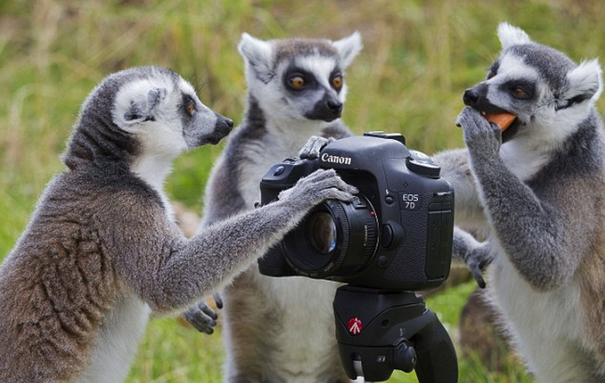 animal-photographers-5.jpg