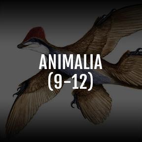 2018-ANIMALIA.jpg