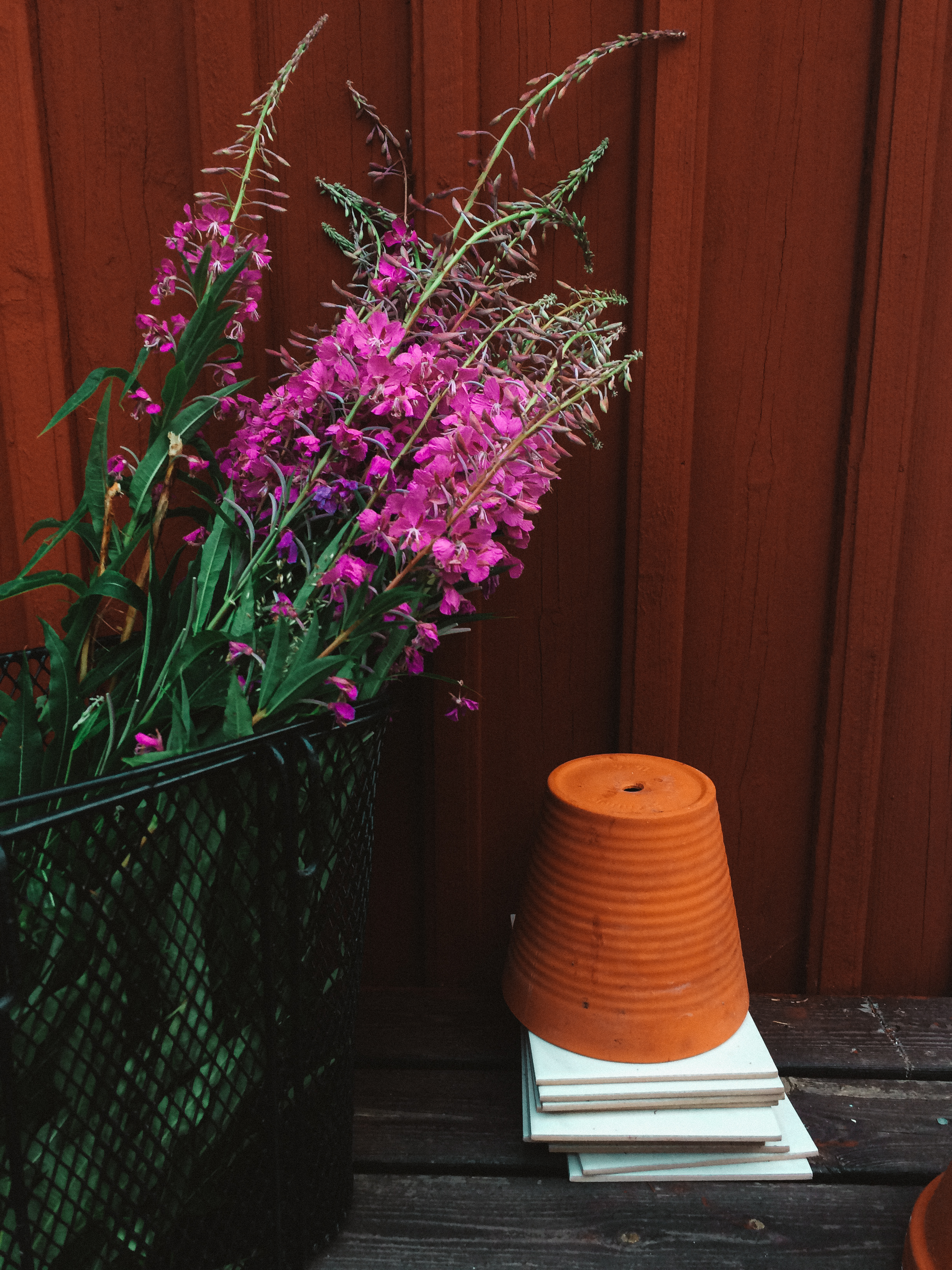 The Swedish forest is full of edible treasures. How about making  cordial out of Fireweed ?