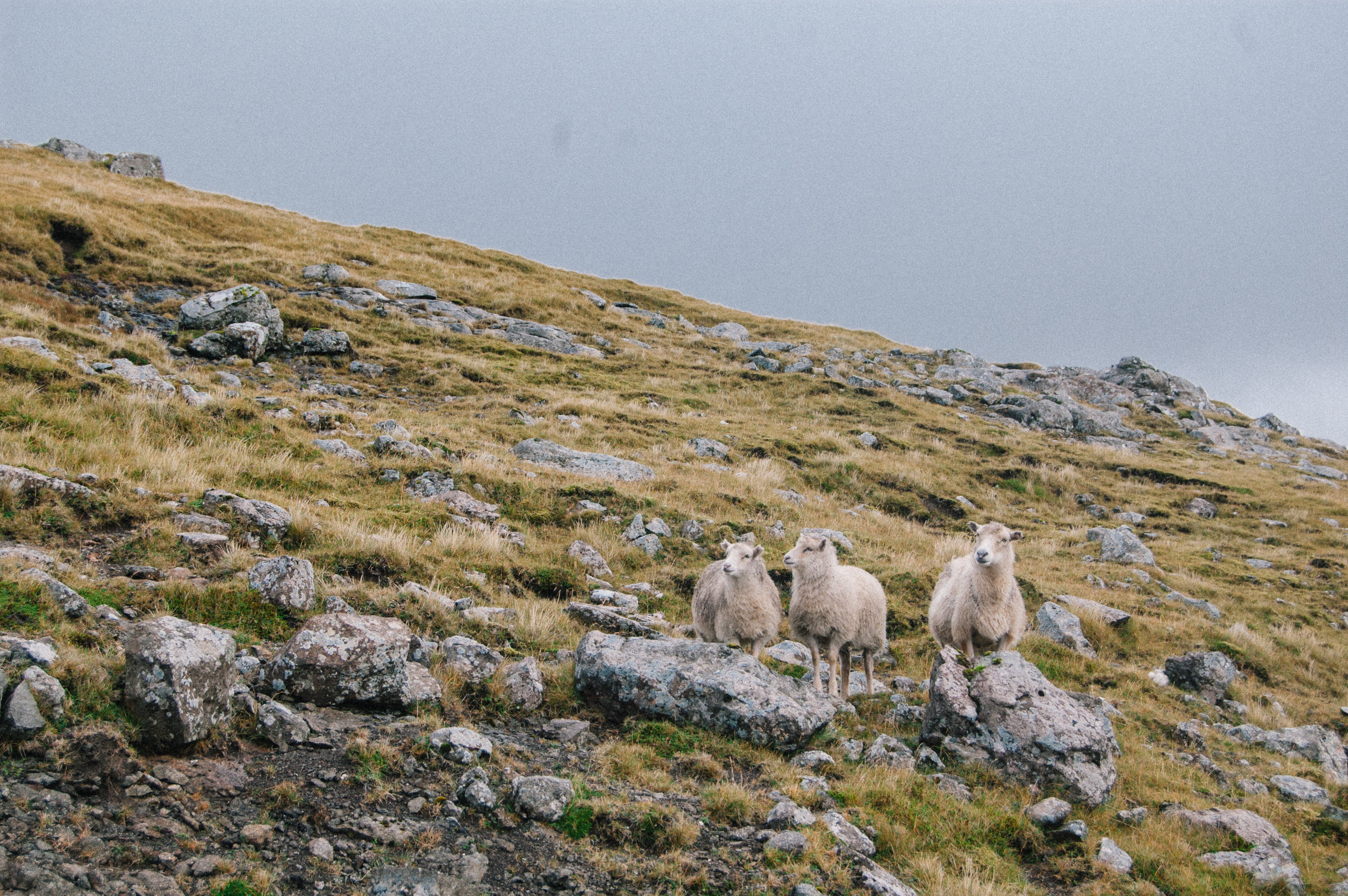 one thing is for sure - you are never alone on the faroes
