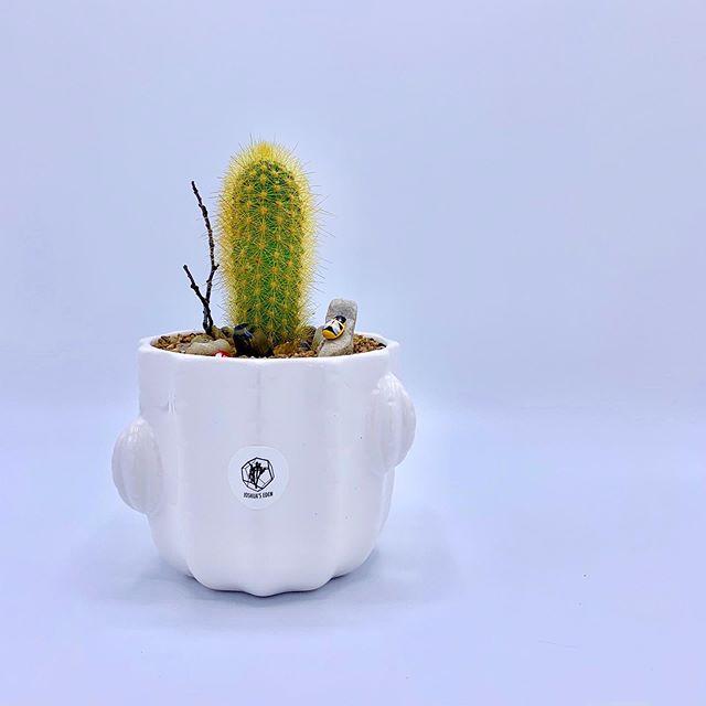 "*Custom Order ""Cactus²"" Cactus within cactus.🌵@joshuaseden . . . #joshuaseden #pottedplant #cactus #pilosocereus #goldenspinecactus #driftwood #moss #succulents #plants #greenthumb #desert #bumblebee #sand #cacti #calgary #calgarybuzz #yyc #yycmade #madeinyyc #yyclocal #shoplocalyyc #yycarts #yycbuisness #yycplants #yycliving #yycnow #ipreview"