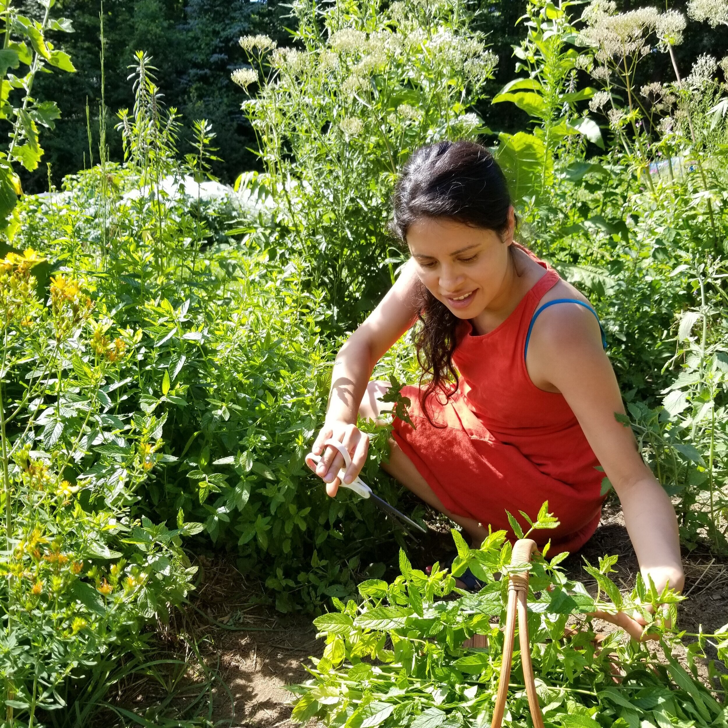Sacred Plant Medicine Apprenticeship Year One 2020 - MULTIPLE LOCATIONS