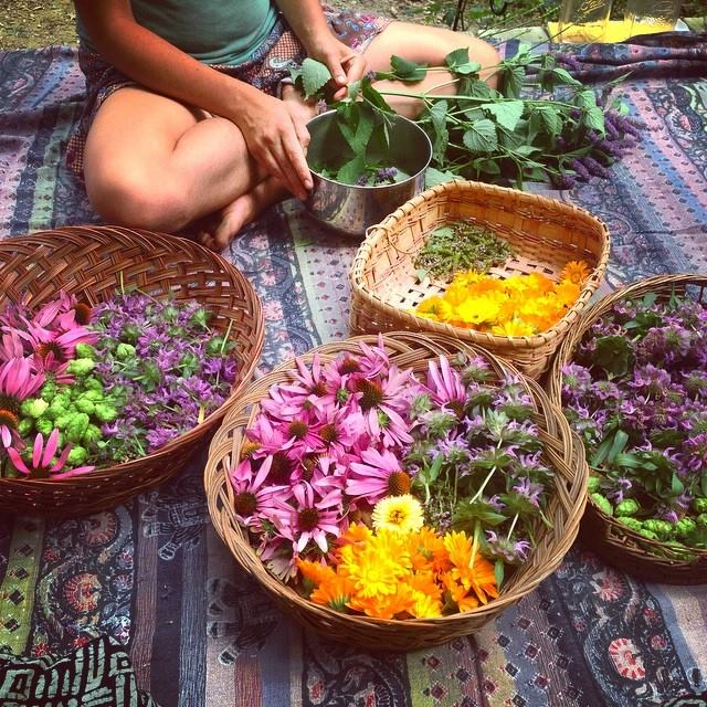 Gaia's Immersion Courses - Offered in 2020Our Gaia School Immersion courses in Vermont are offered for distance learners who wish to come train at The Gaia School for a concentrated 1 or 2 weeks. These trainings are meant to be an immersive experience in sacred plant medicine with Sage. Immersion courses will be offered in the summer and fall of 2020. Check back for more information posted this month!