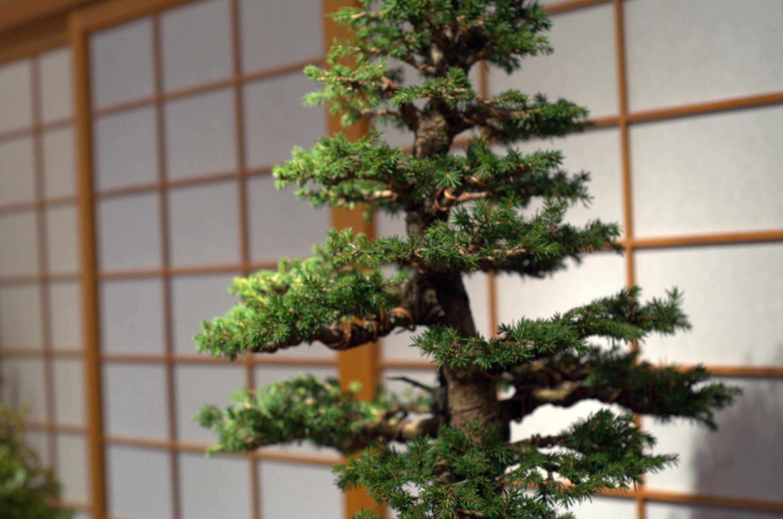 Bonsai museum in Portland, OR