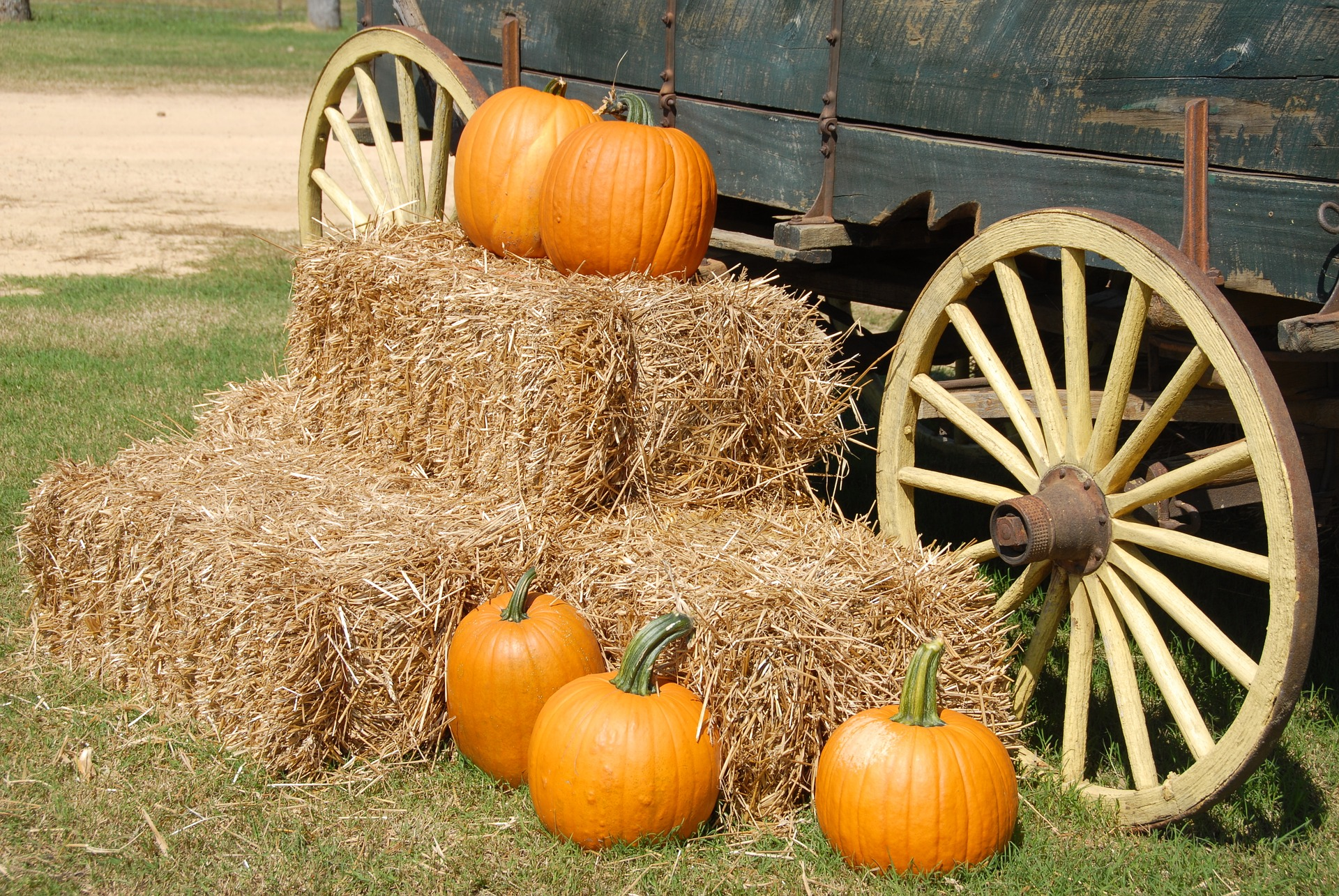October is also the perfect time to go pumpkin picking!