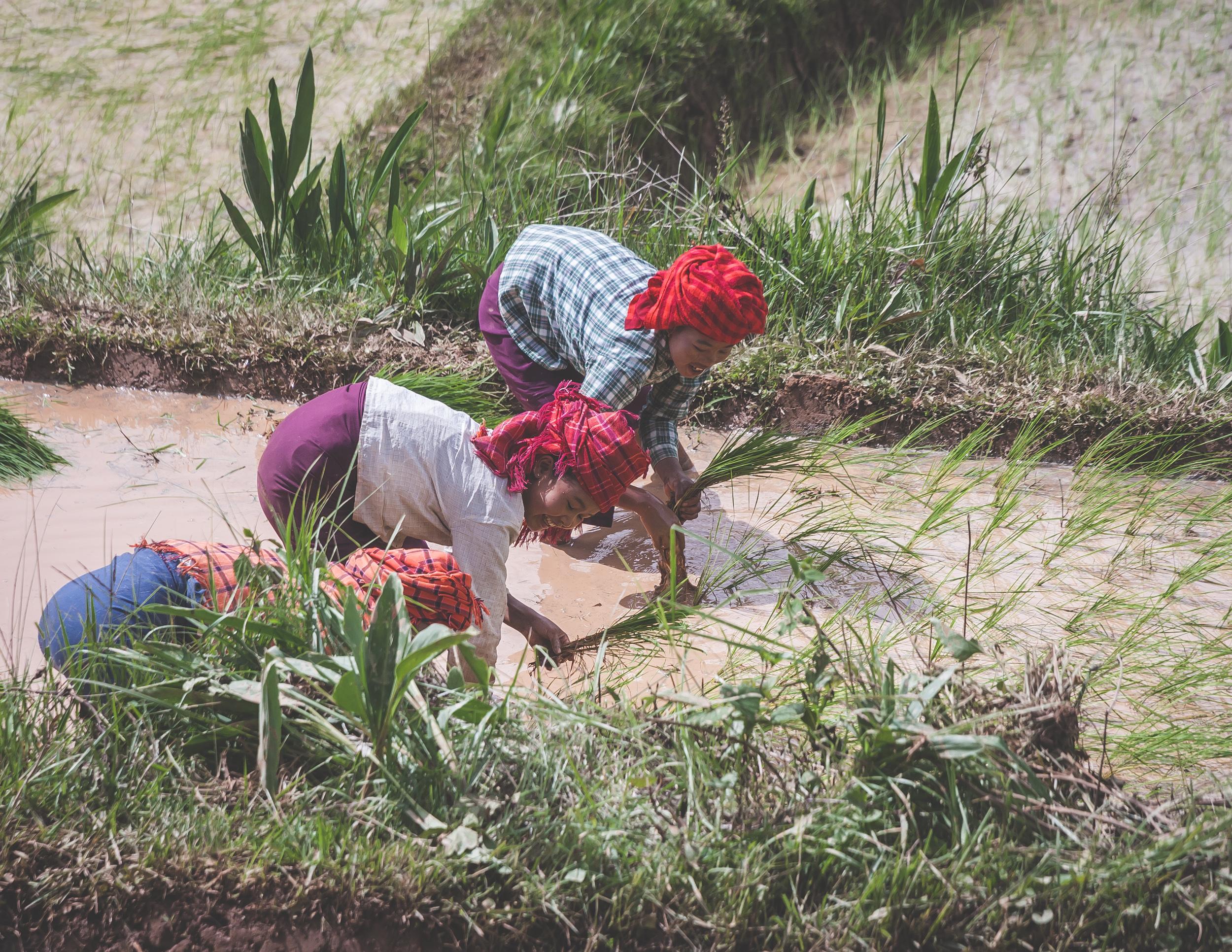 Rural Burma