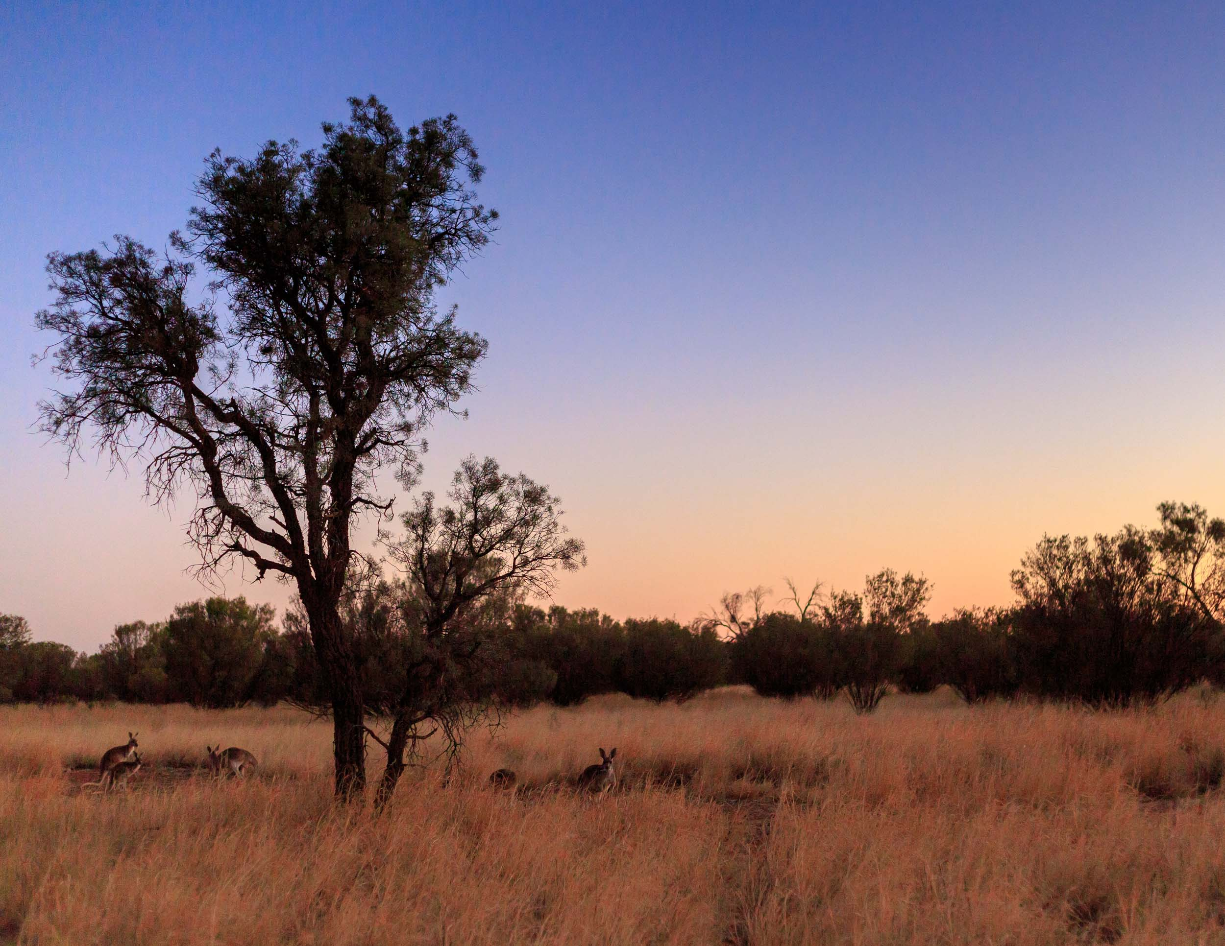 The Kangaroo Sanctuary at sunset