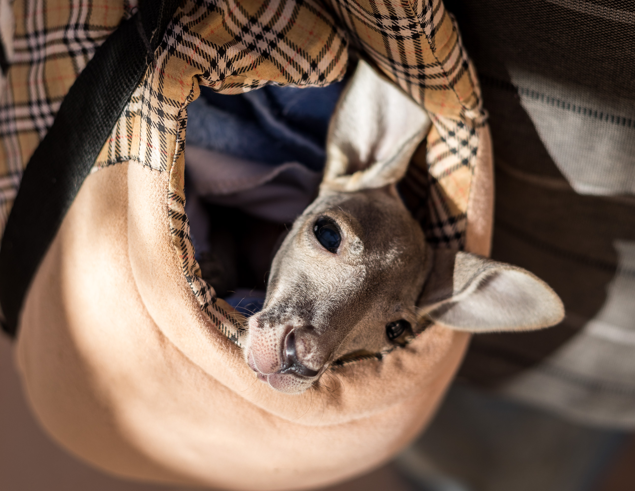Best things to do in Coober Pedy: Luke the Joey