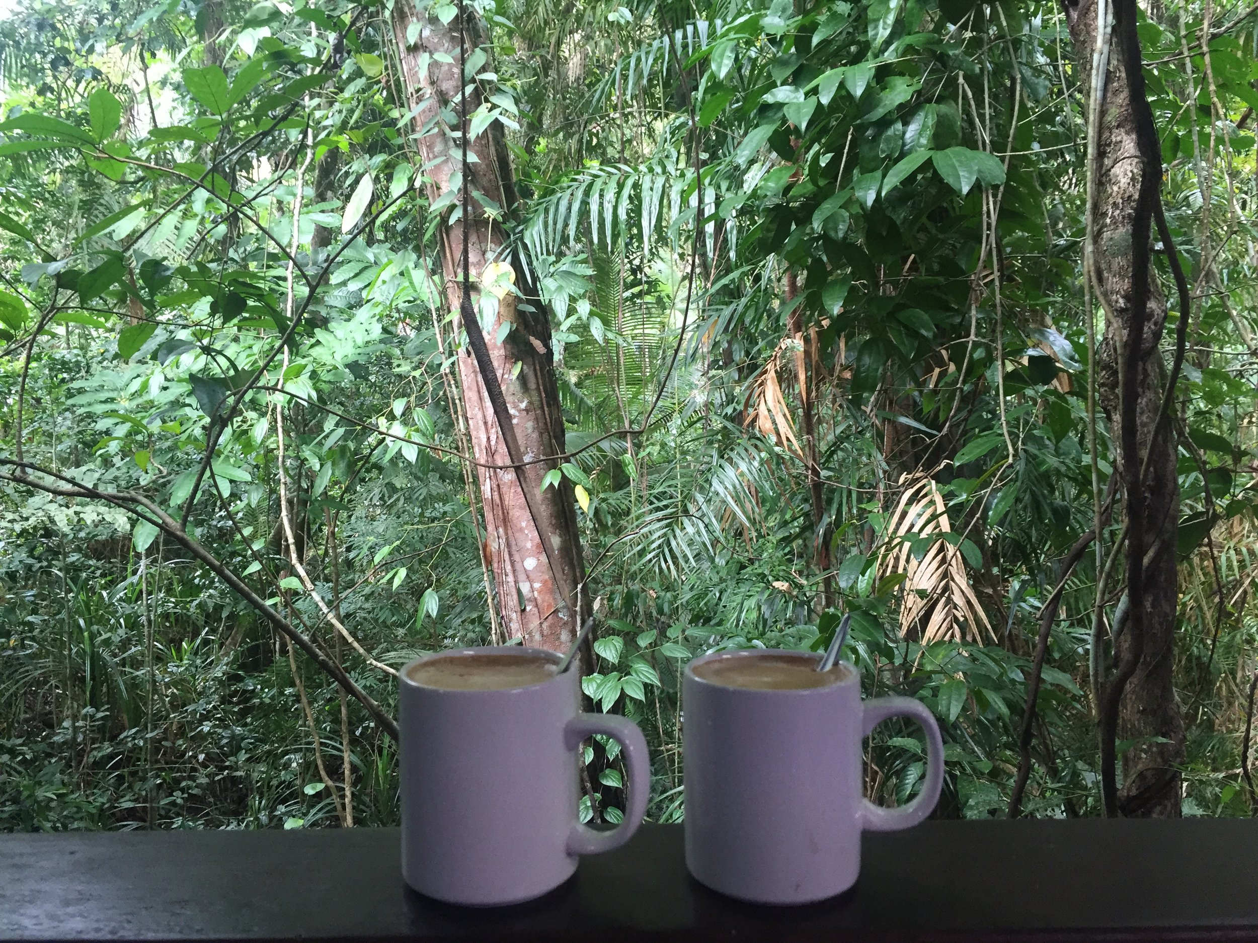Things to do in Cairns: Coffee with a view in the Daintree