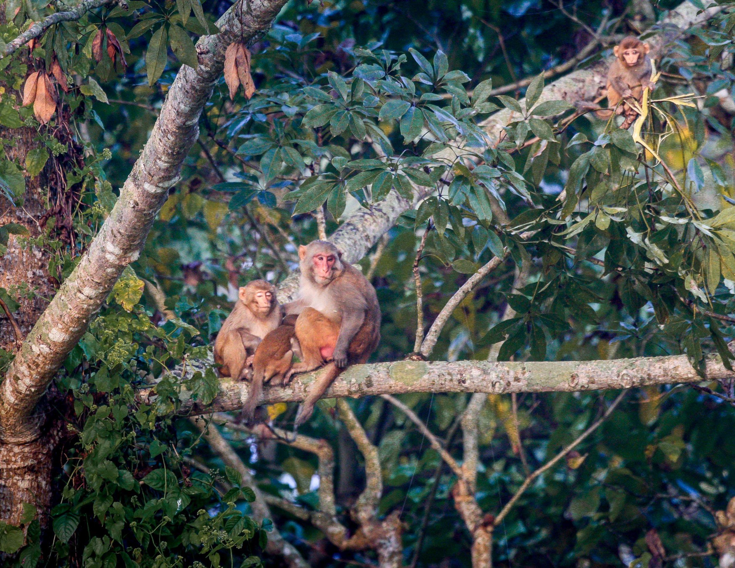 Best things to do in Nepal: wildlife watching in Chitwan