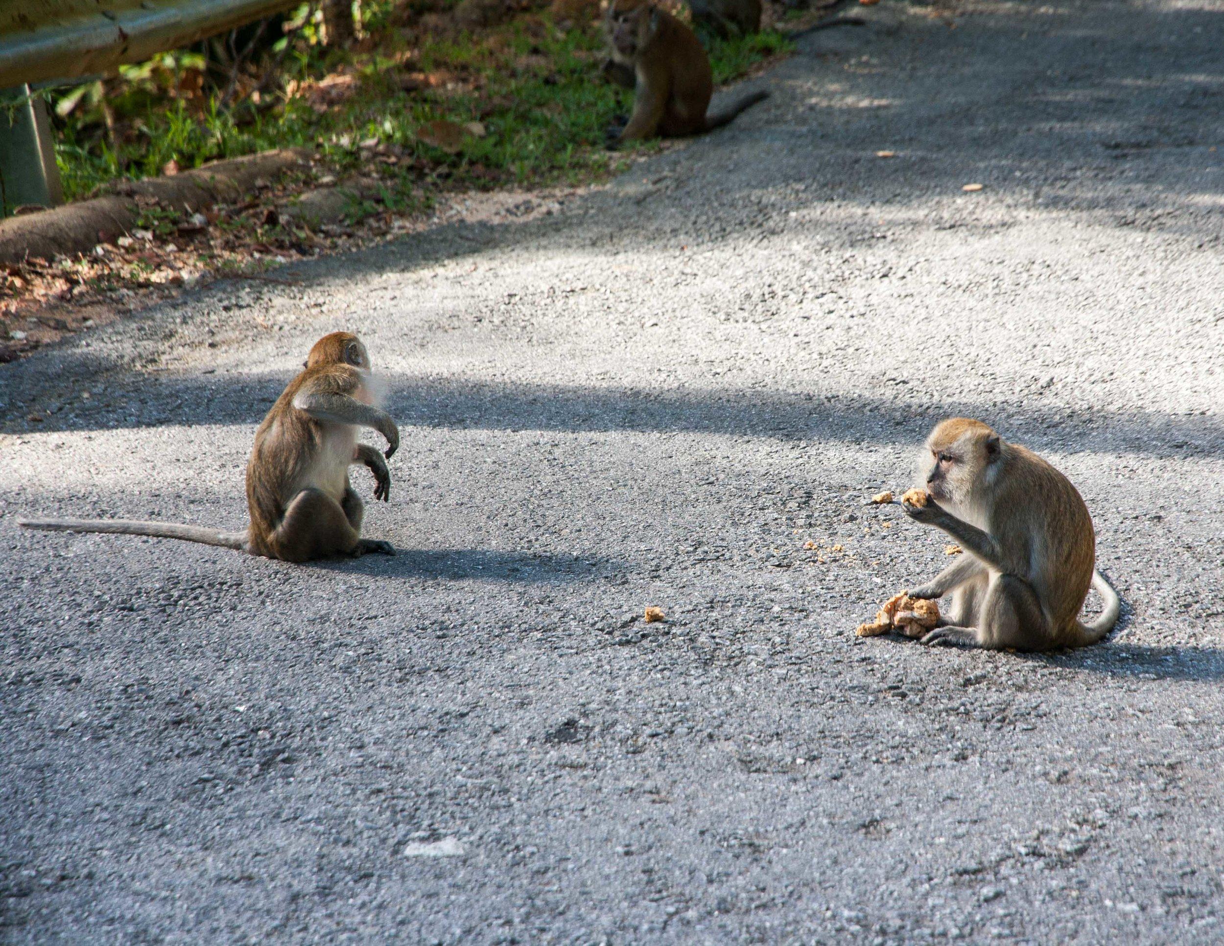 Hiking Penang National Park