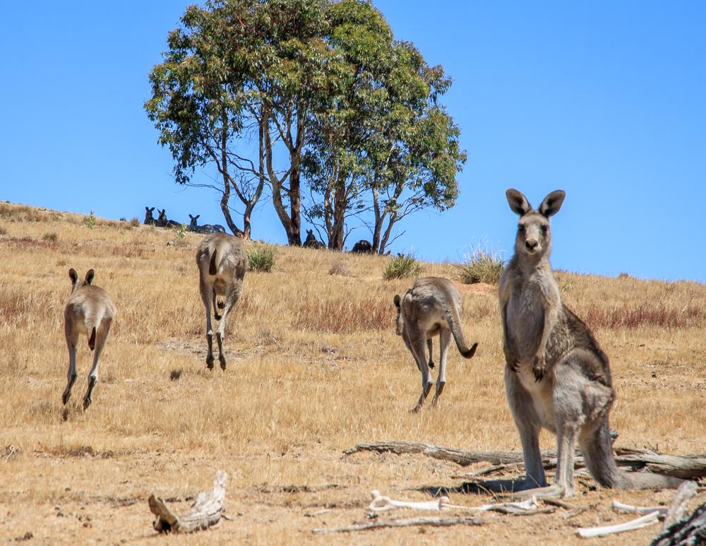 Namadji National Park, ACT