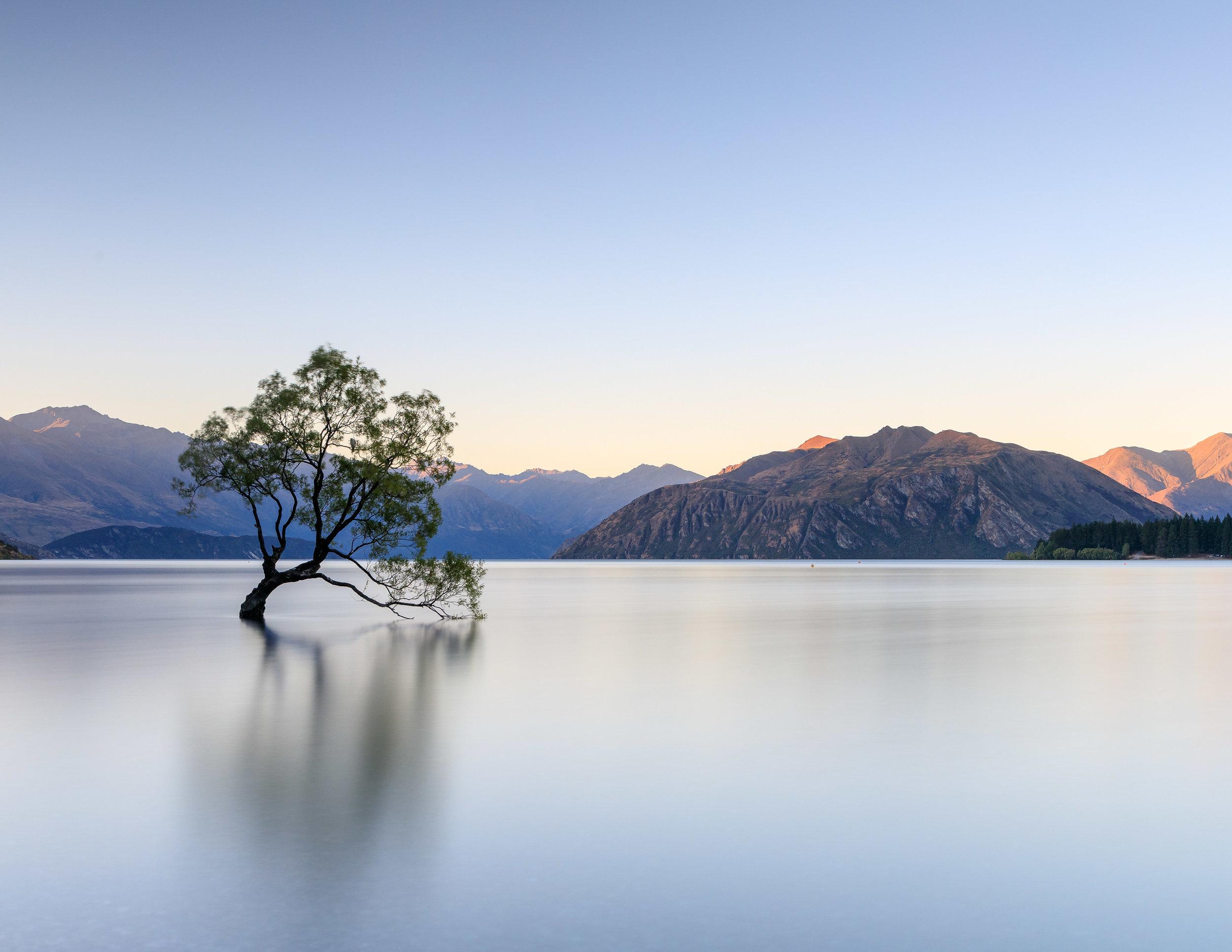 That Wanaka Tree, Wanaka New Zealand
