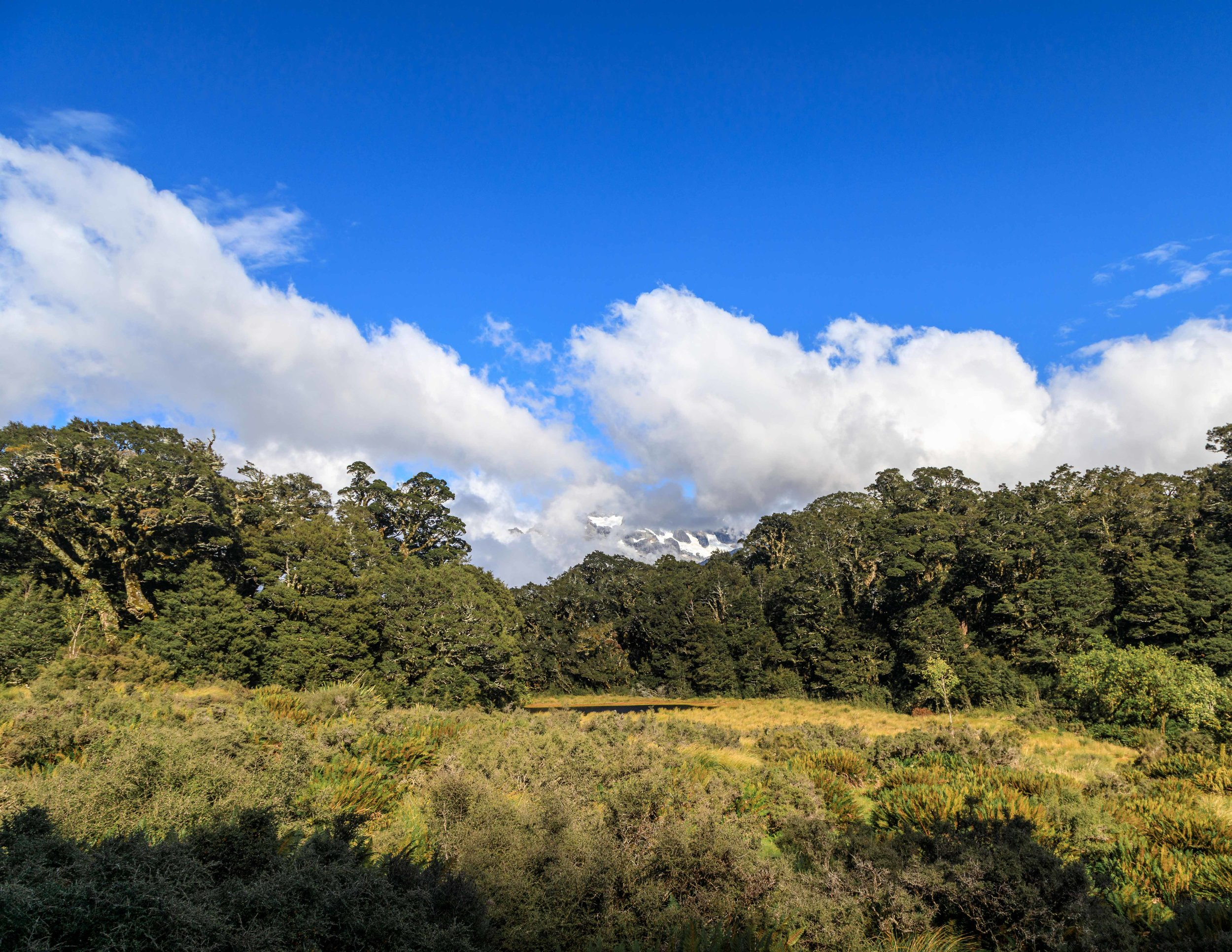 The Routeburn Track: The Orchard