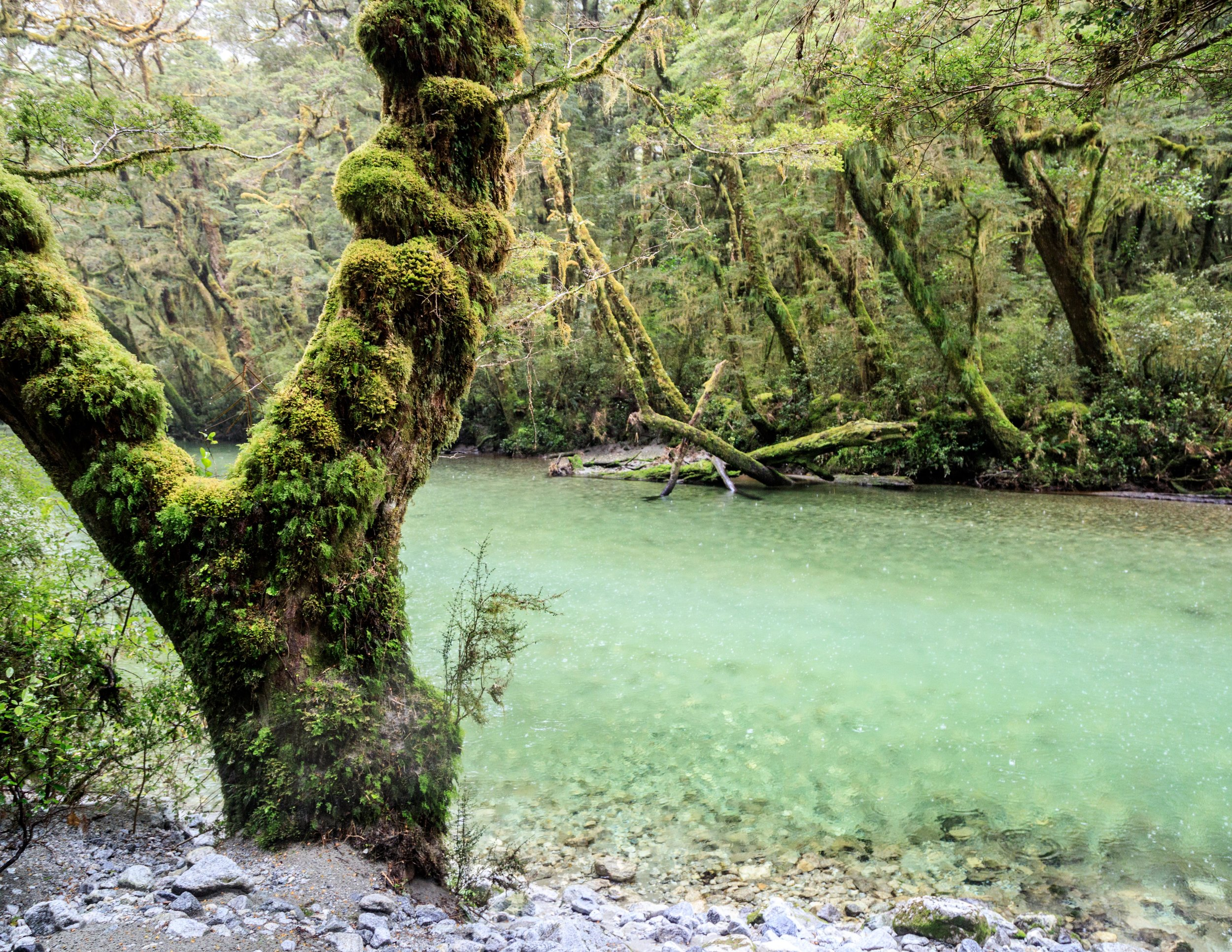 Clinton River on the Milford Track