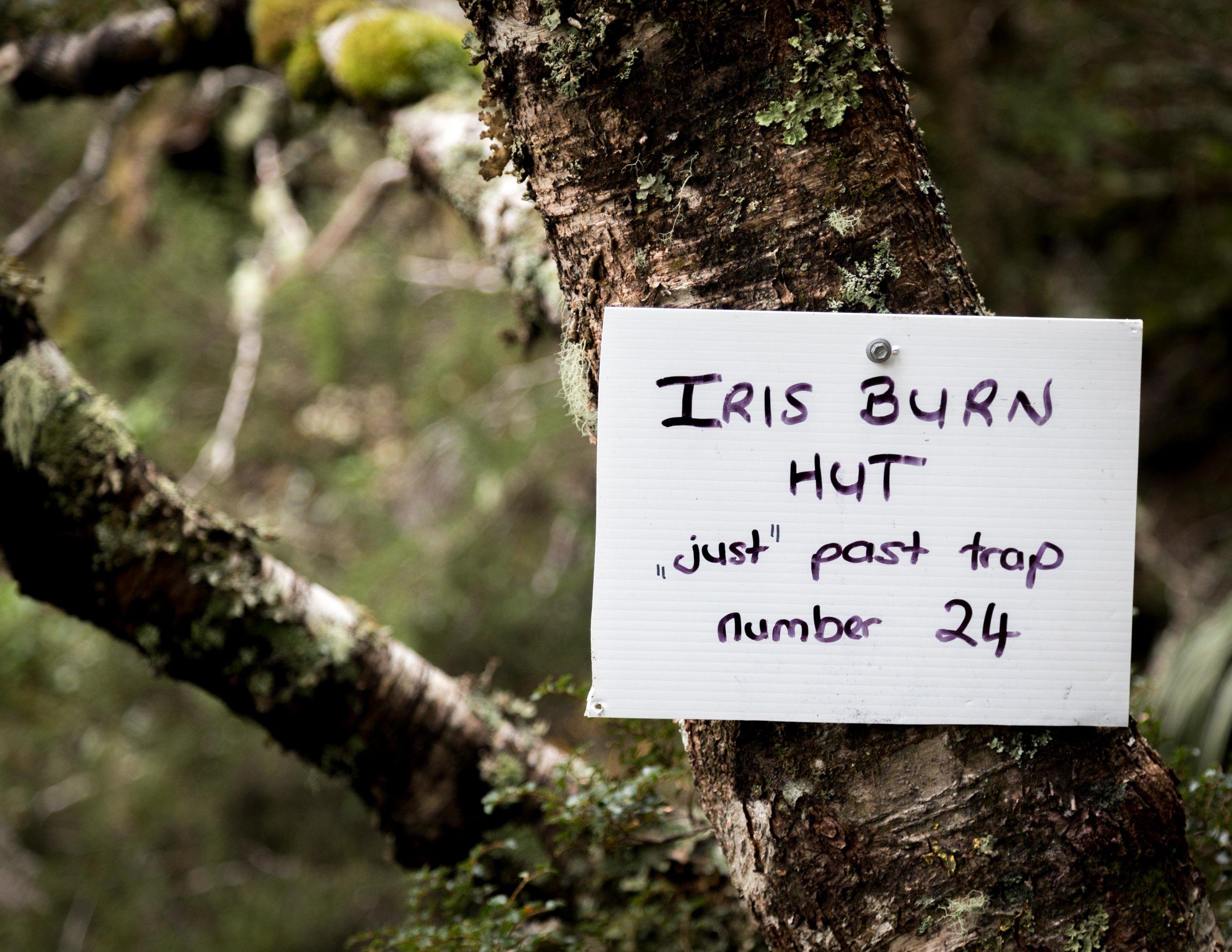 Iris Burn sign