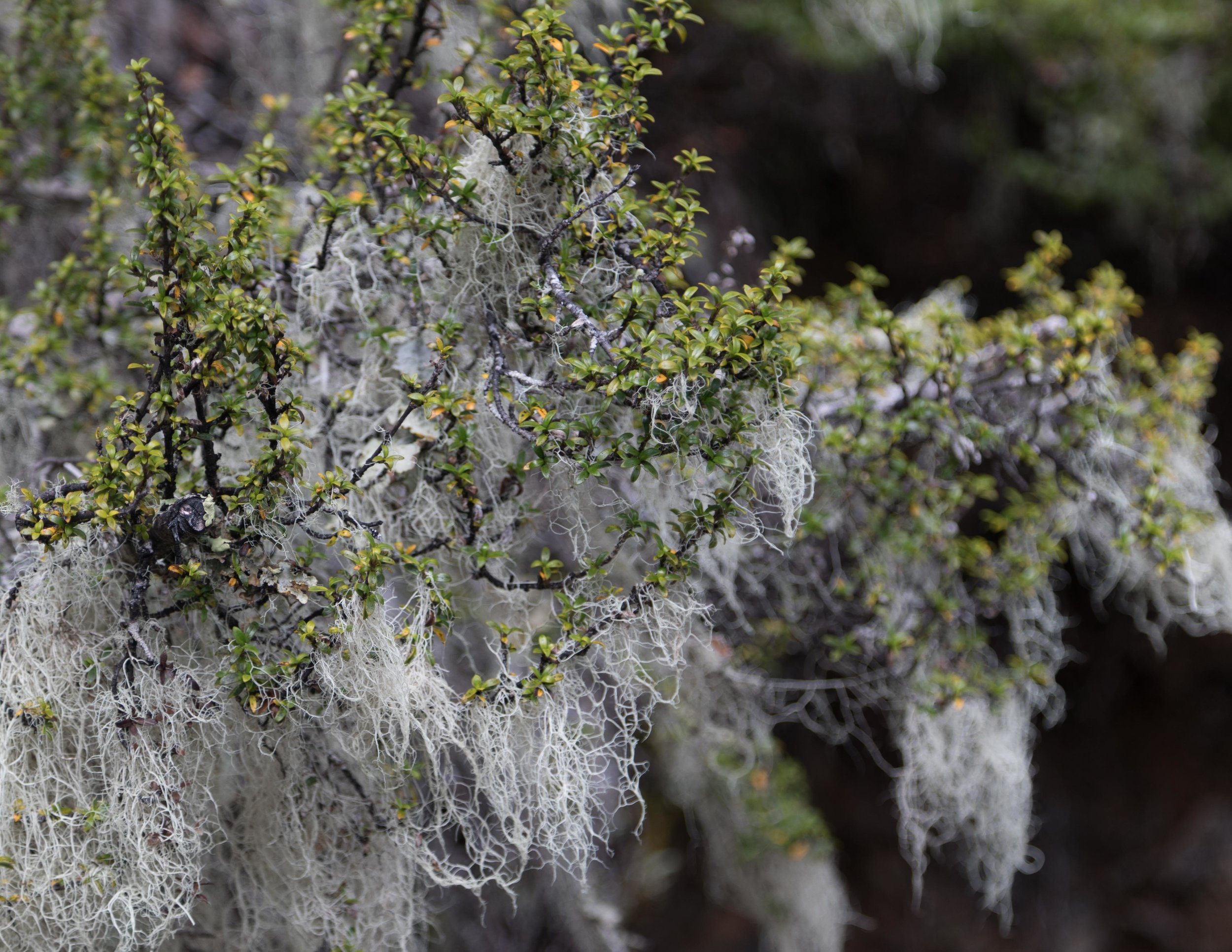 Lichen on the Kepler Track