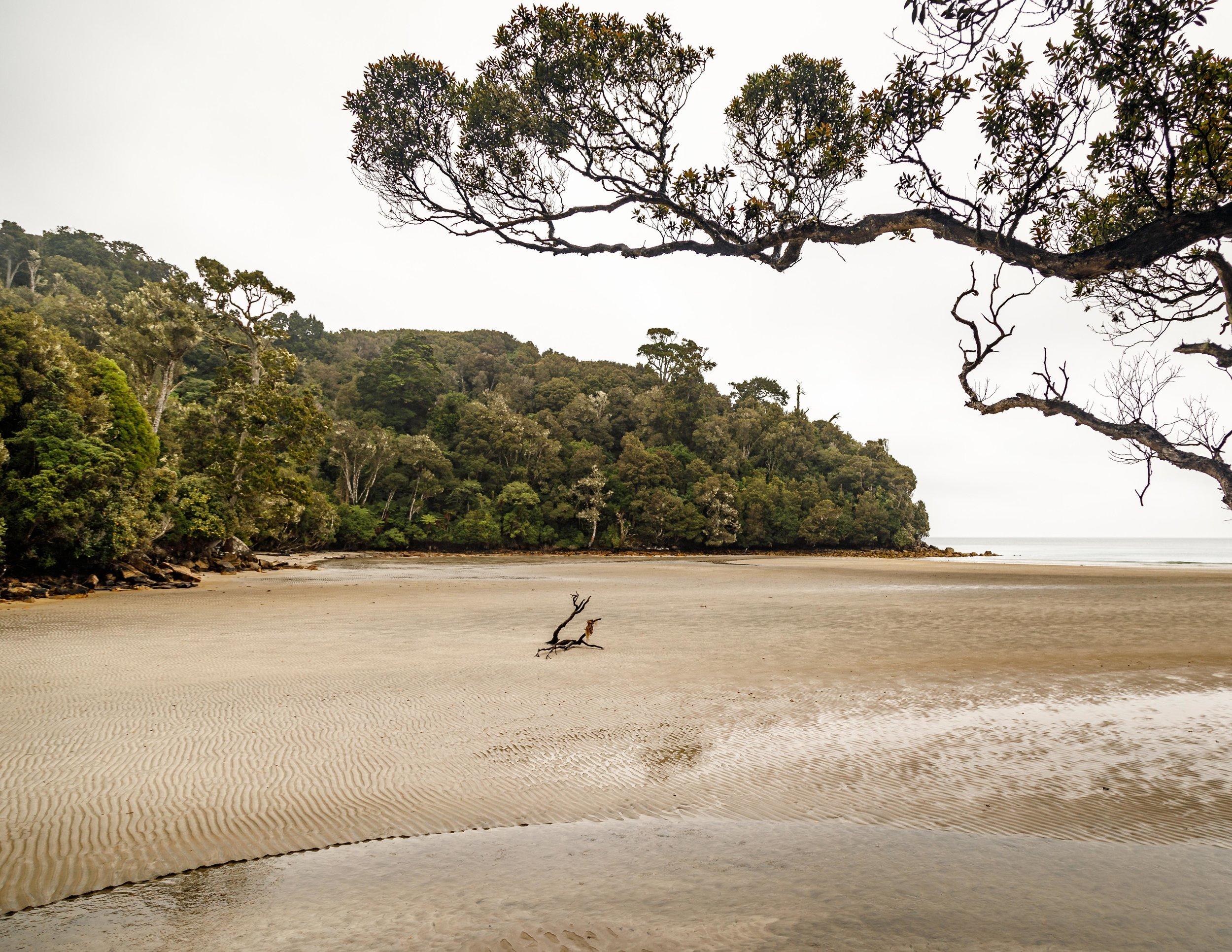 Beach on the Rakiura Track