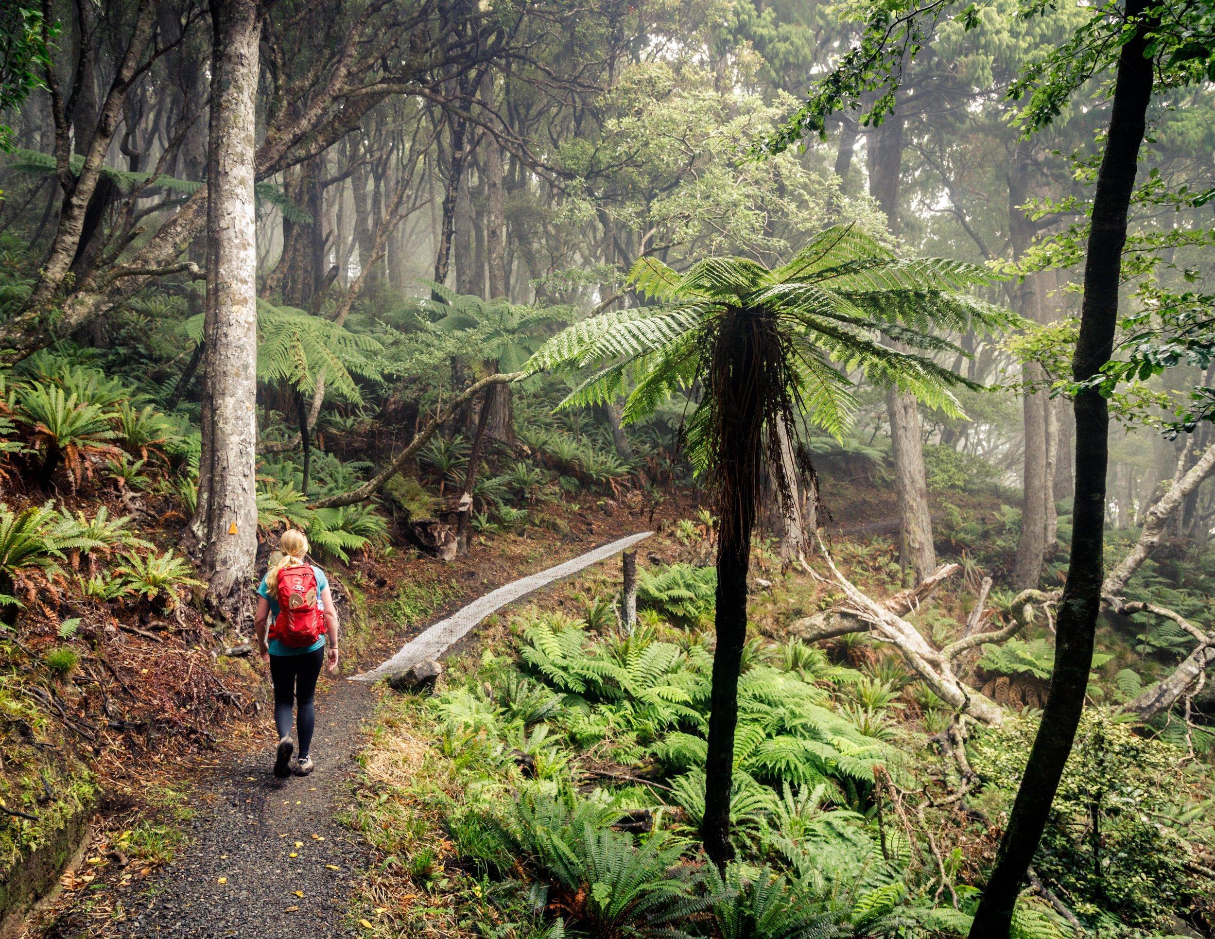 Forest on the Rakiura Track
