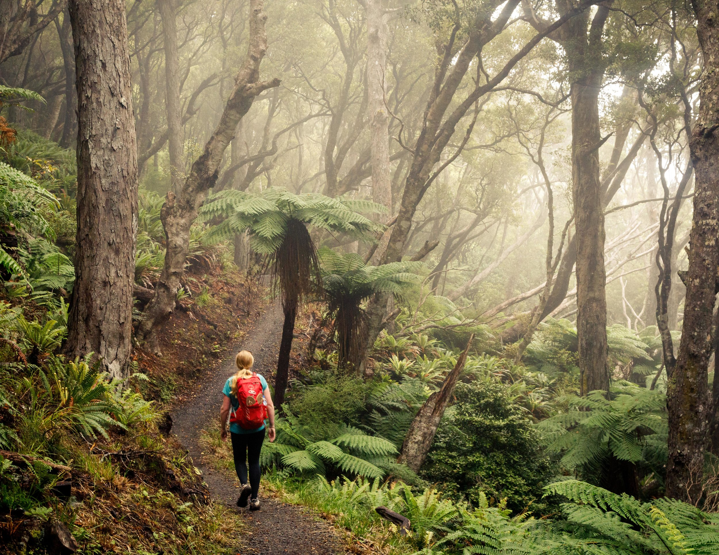 Foggy forest on the Rakiura Track