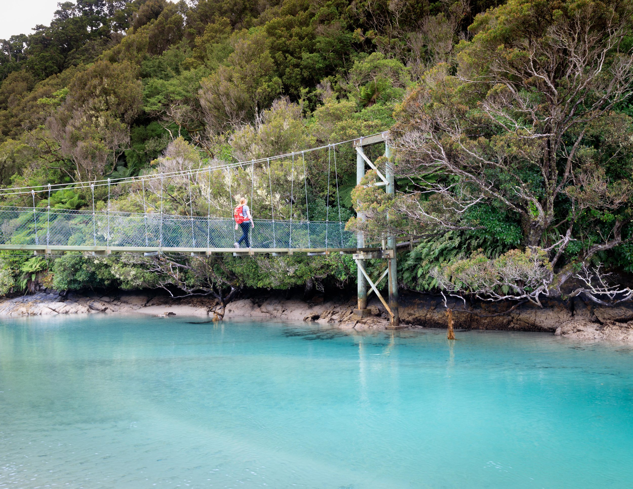 Bridge over a stunning blue river, Rakiura Track, Stewart Island