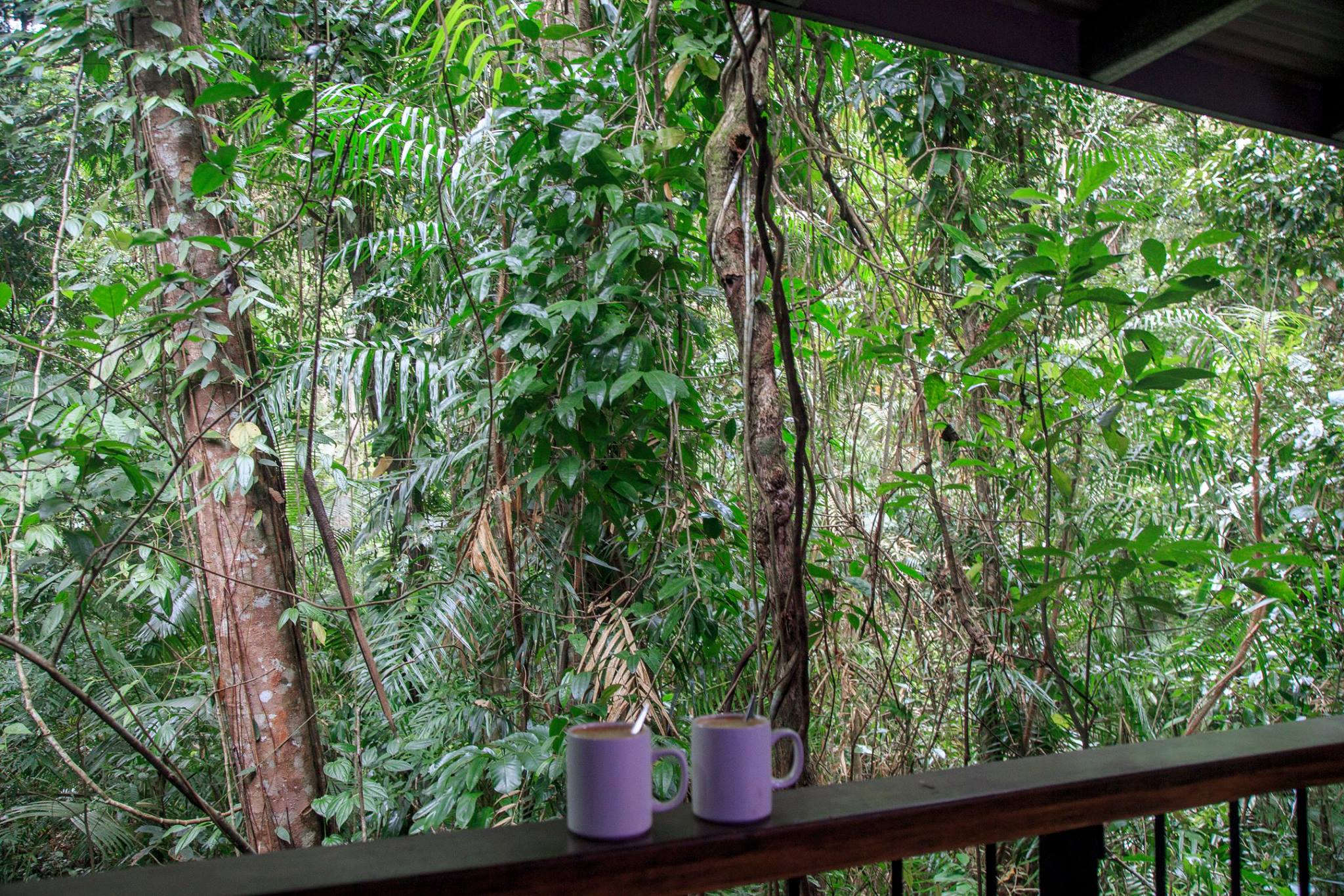 Coffee with a view at the Daintree Discovery Centre, Queensland