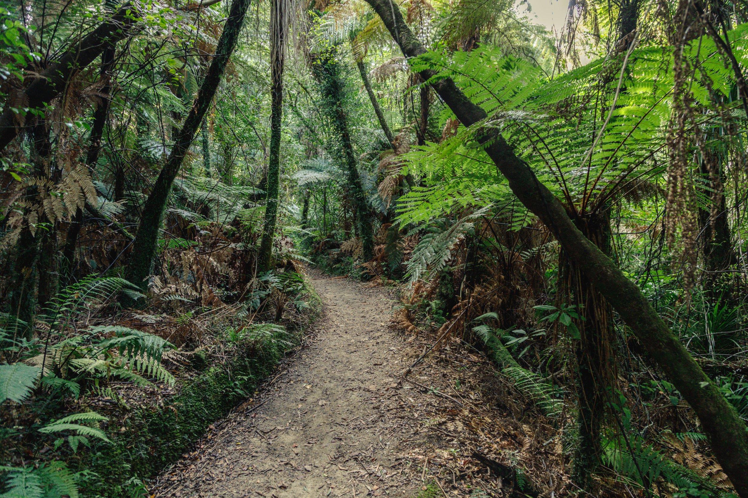 Tree ferns, Abel Tasman Track