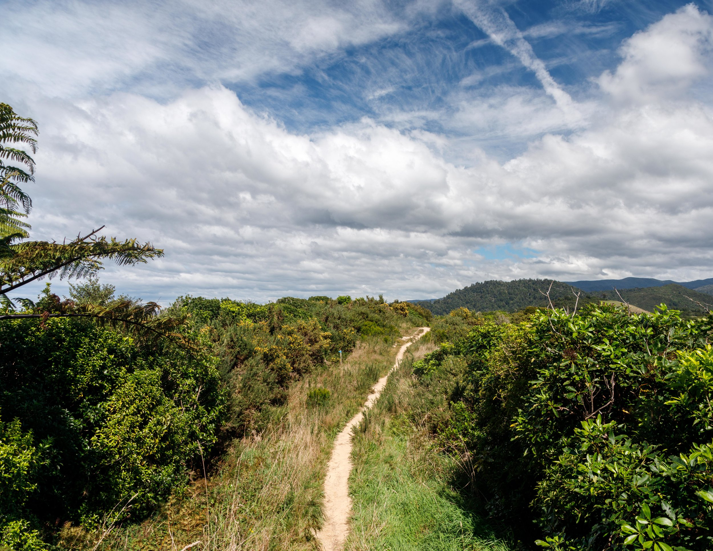 Gibbs Hill Track - Abel Tasman The rack