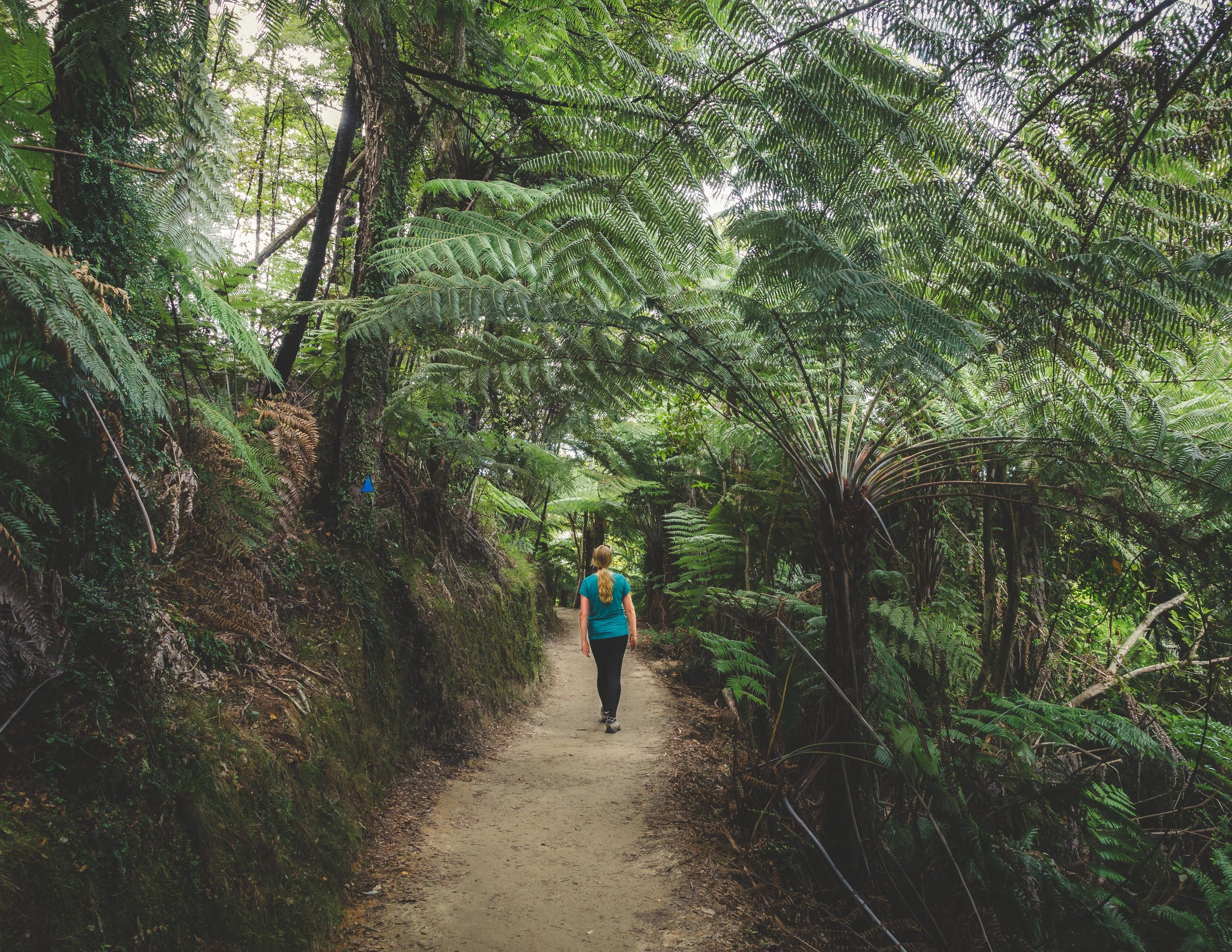 So many amazing tree ferns on this track