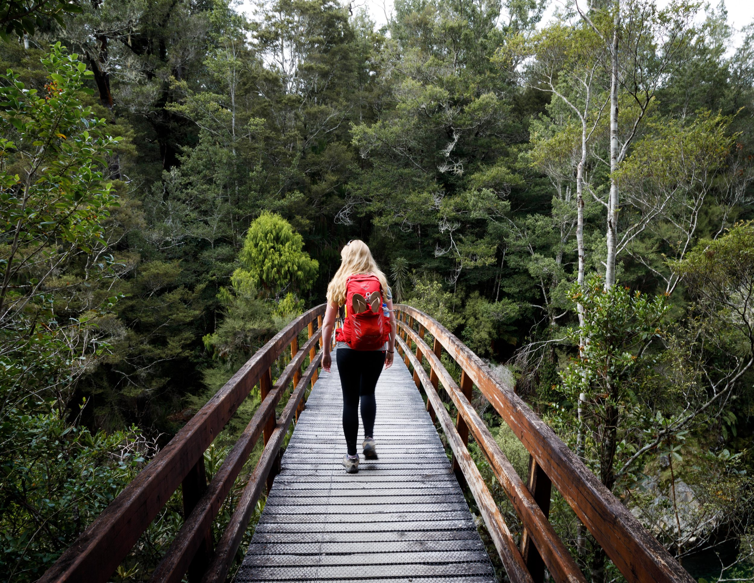 The Heaphy Track: day 1