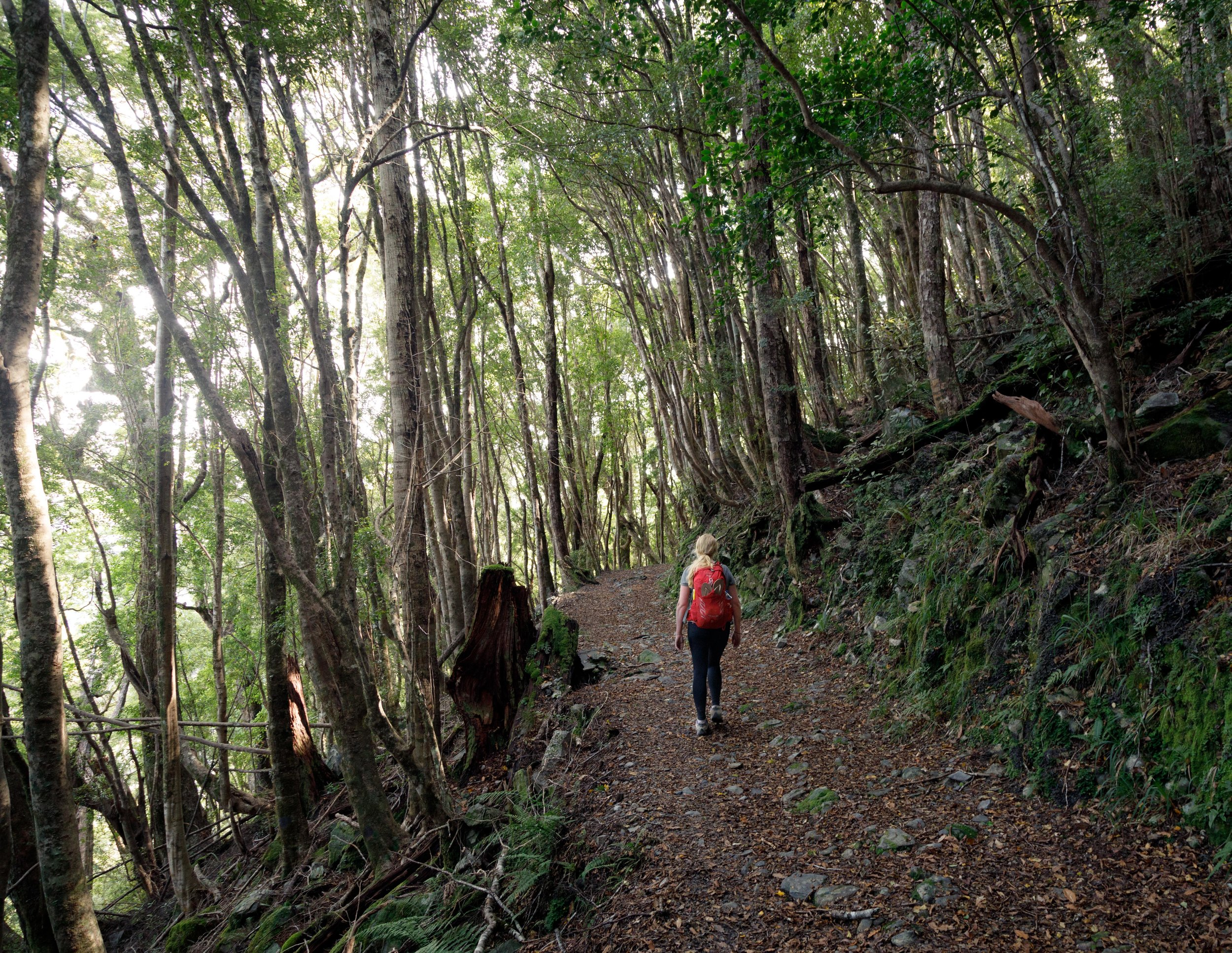 The Heaphy Track: Walking through the forest